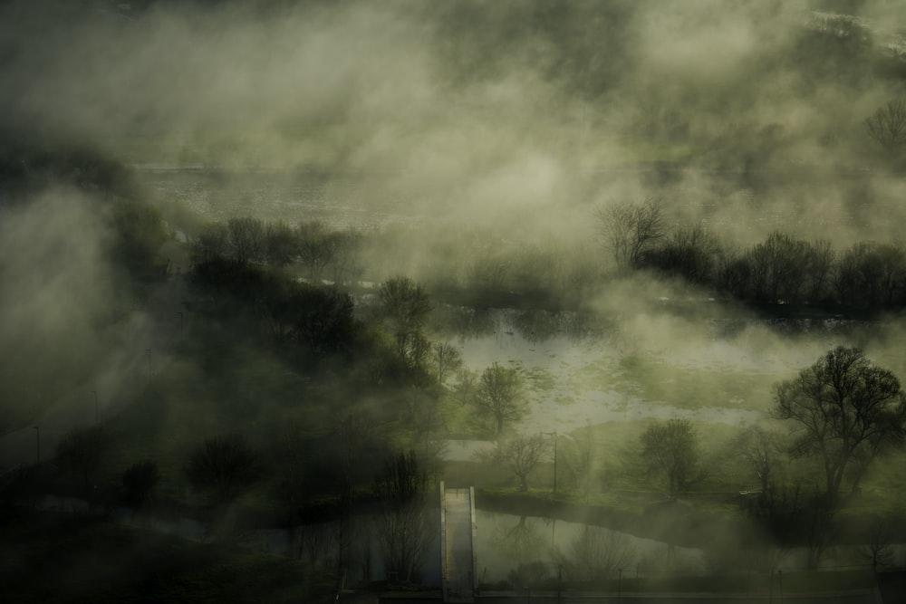 fog covered trees illustration