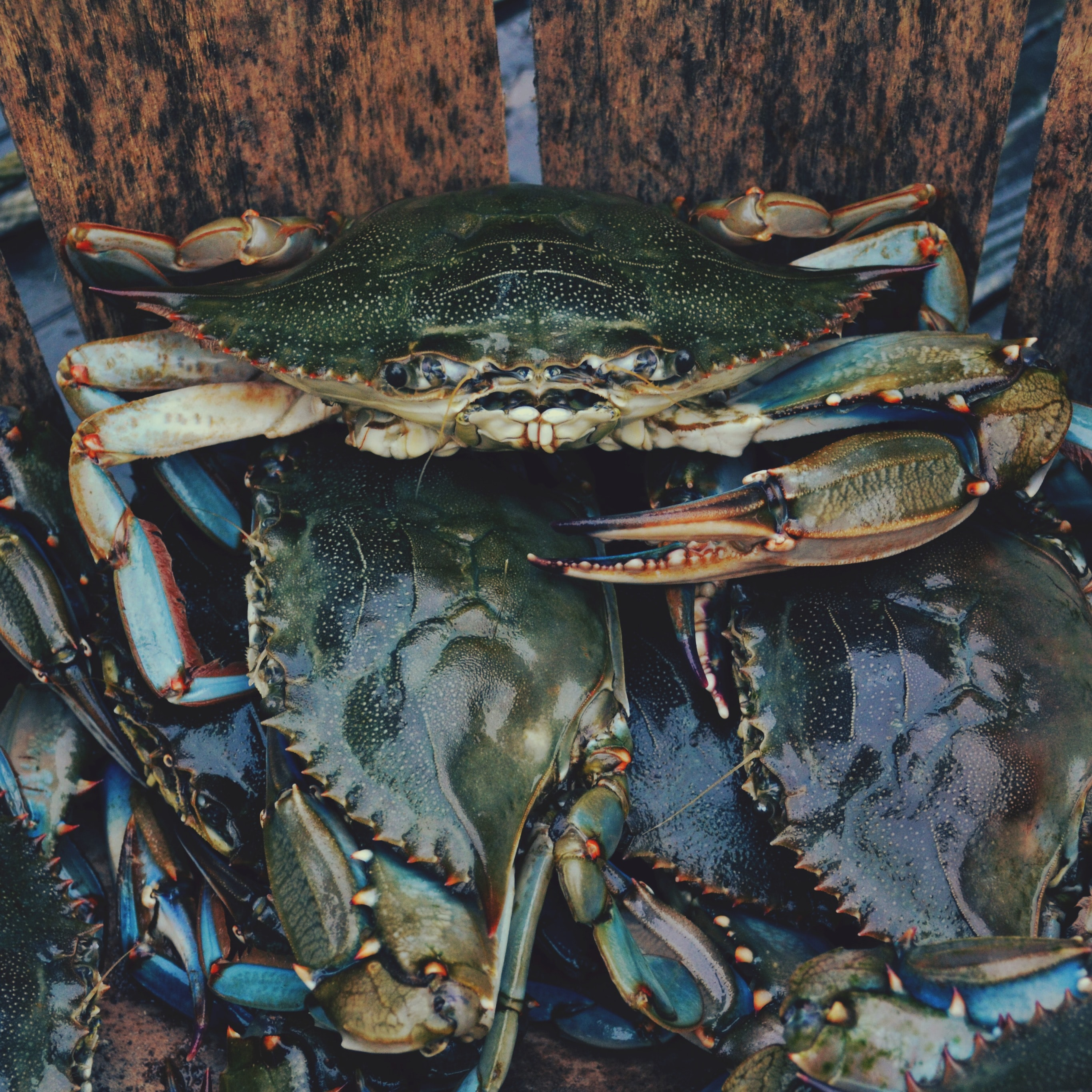 close up photography of crabs