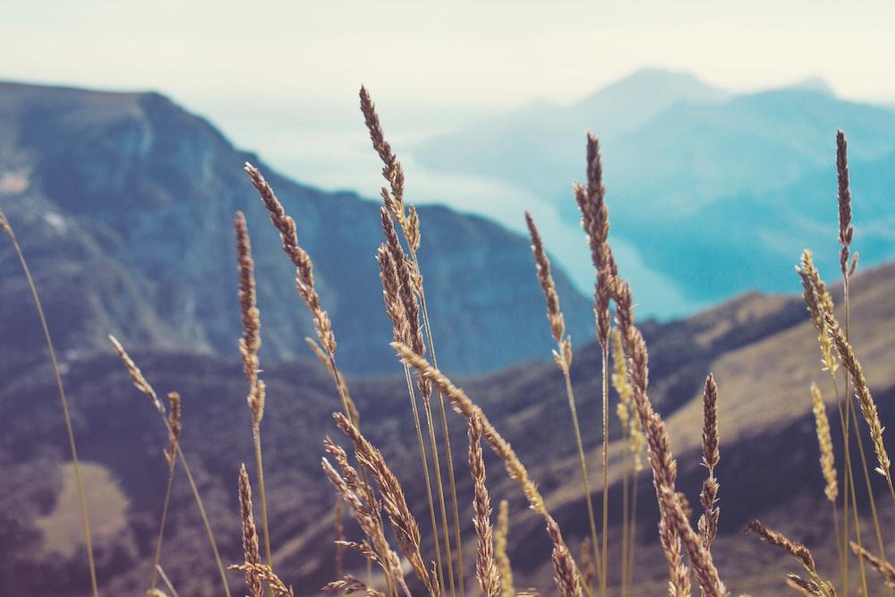 closeup photography of grass
