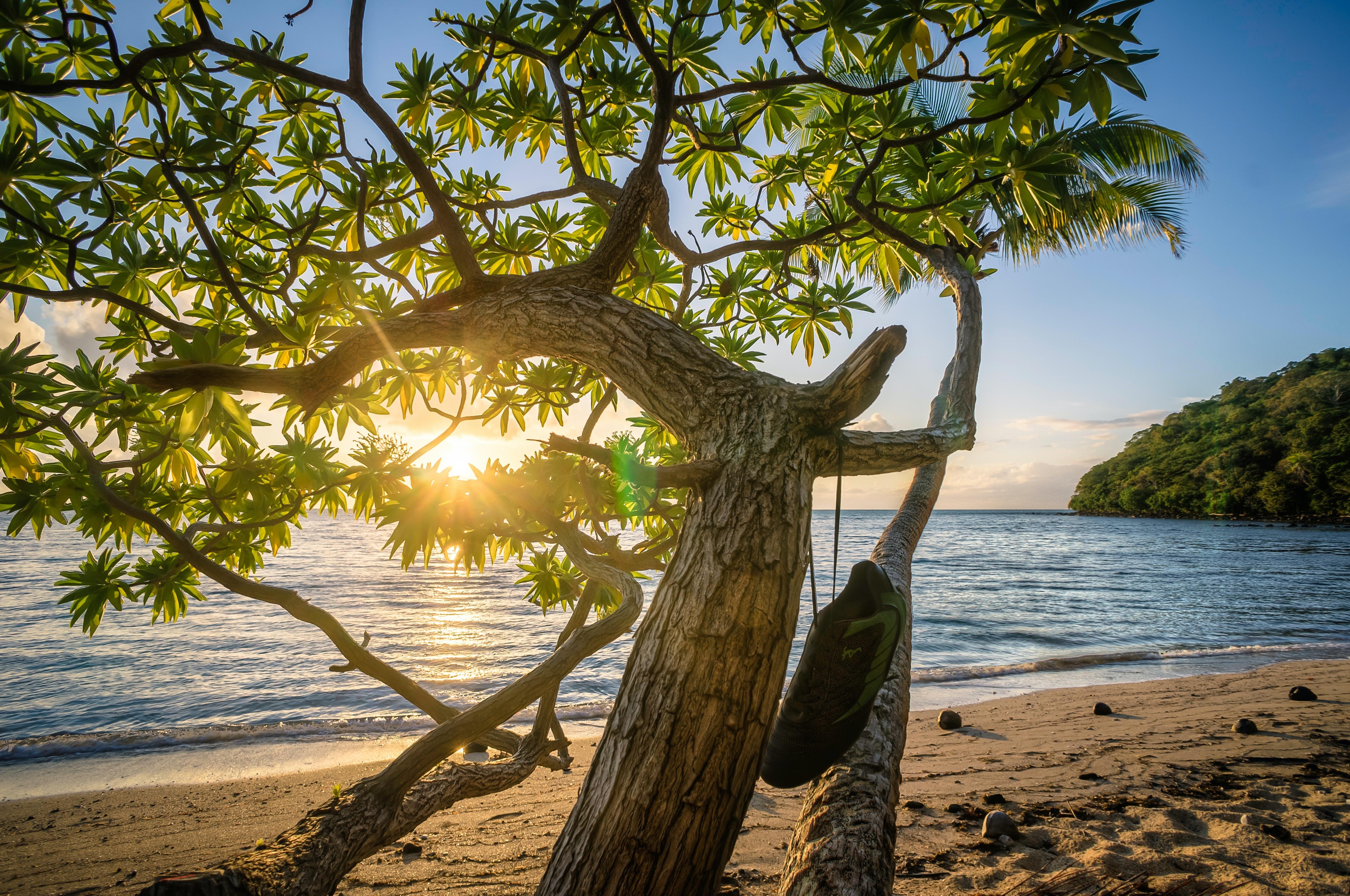 green tree on seashore near beach at daytime