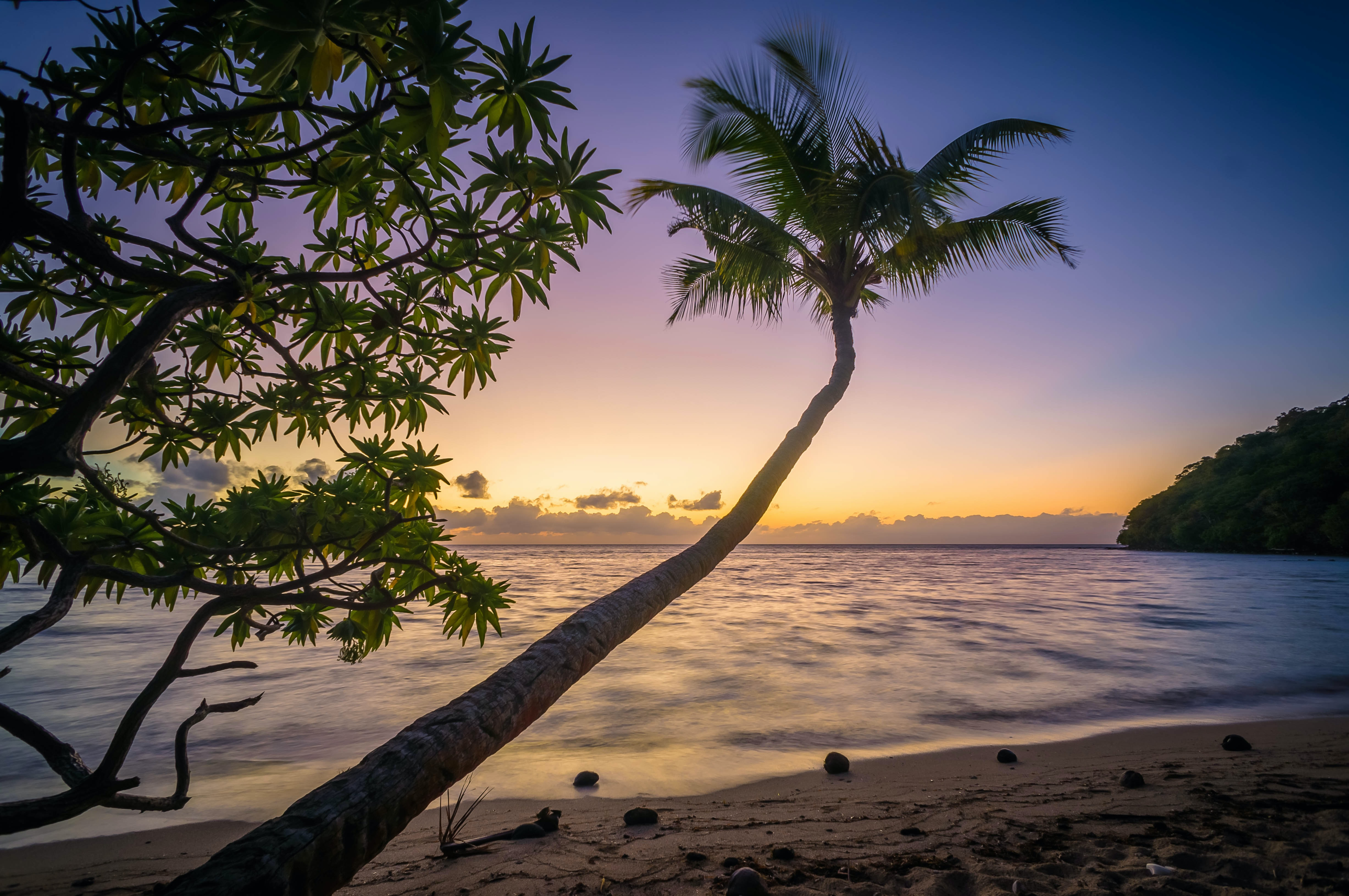 Coconut palm tree at the sandy beach by the ocean at the sunset