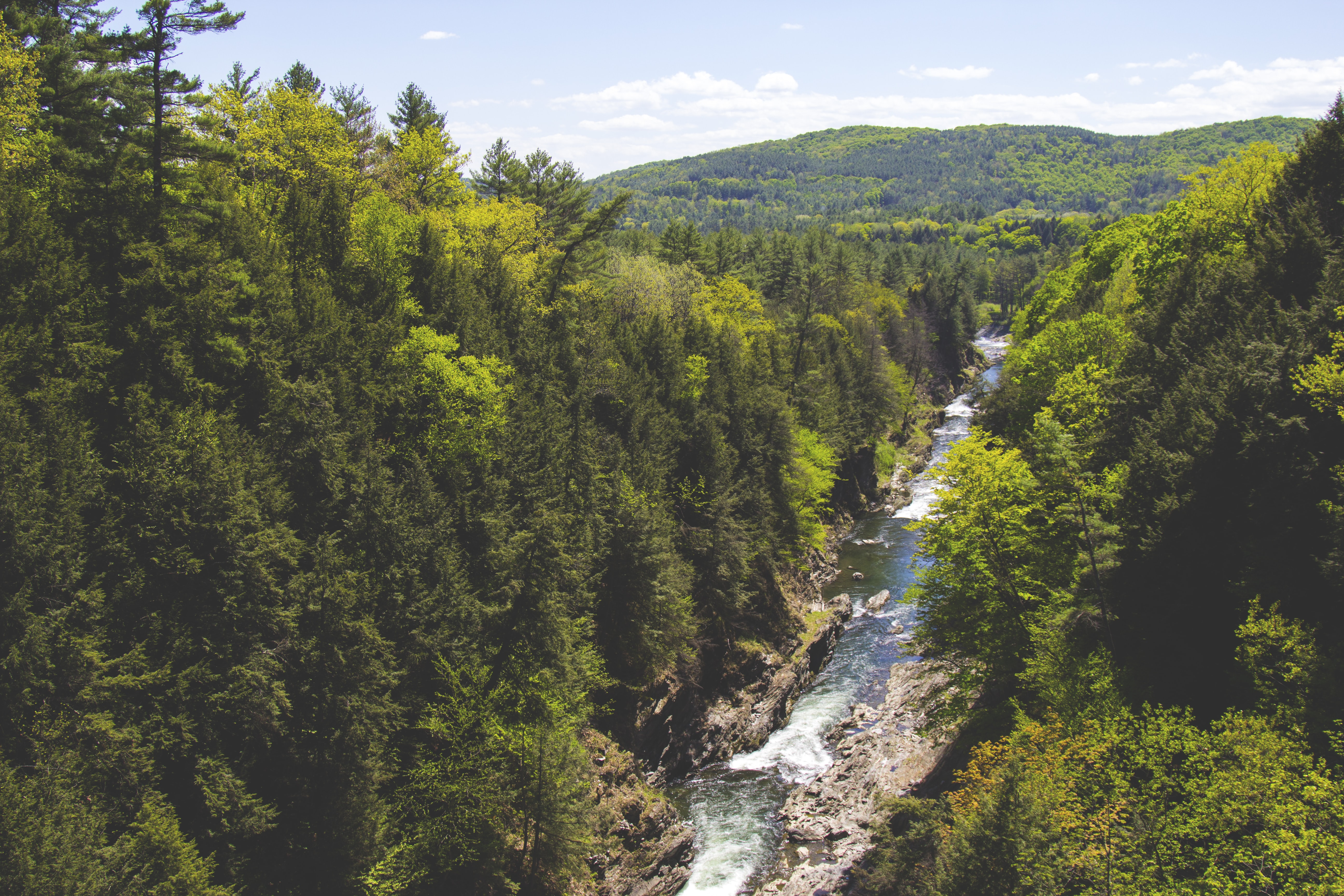 aerial photography of flowing river in between pine trees overlooking green mountain under blue sky at daytime