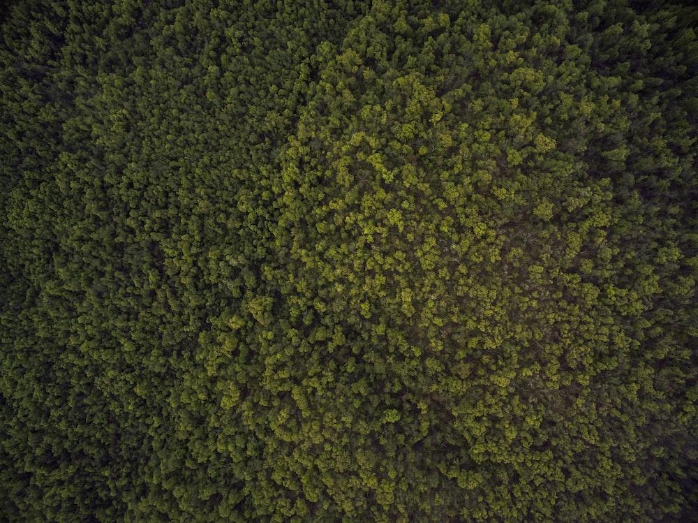 bird's-eye view photo of trees
