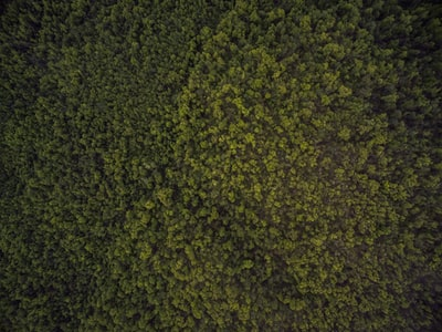 bird's-eye view photo of trees aerial zoom background