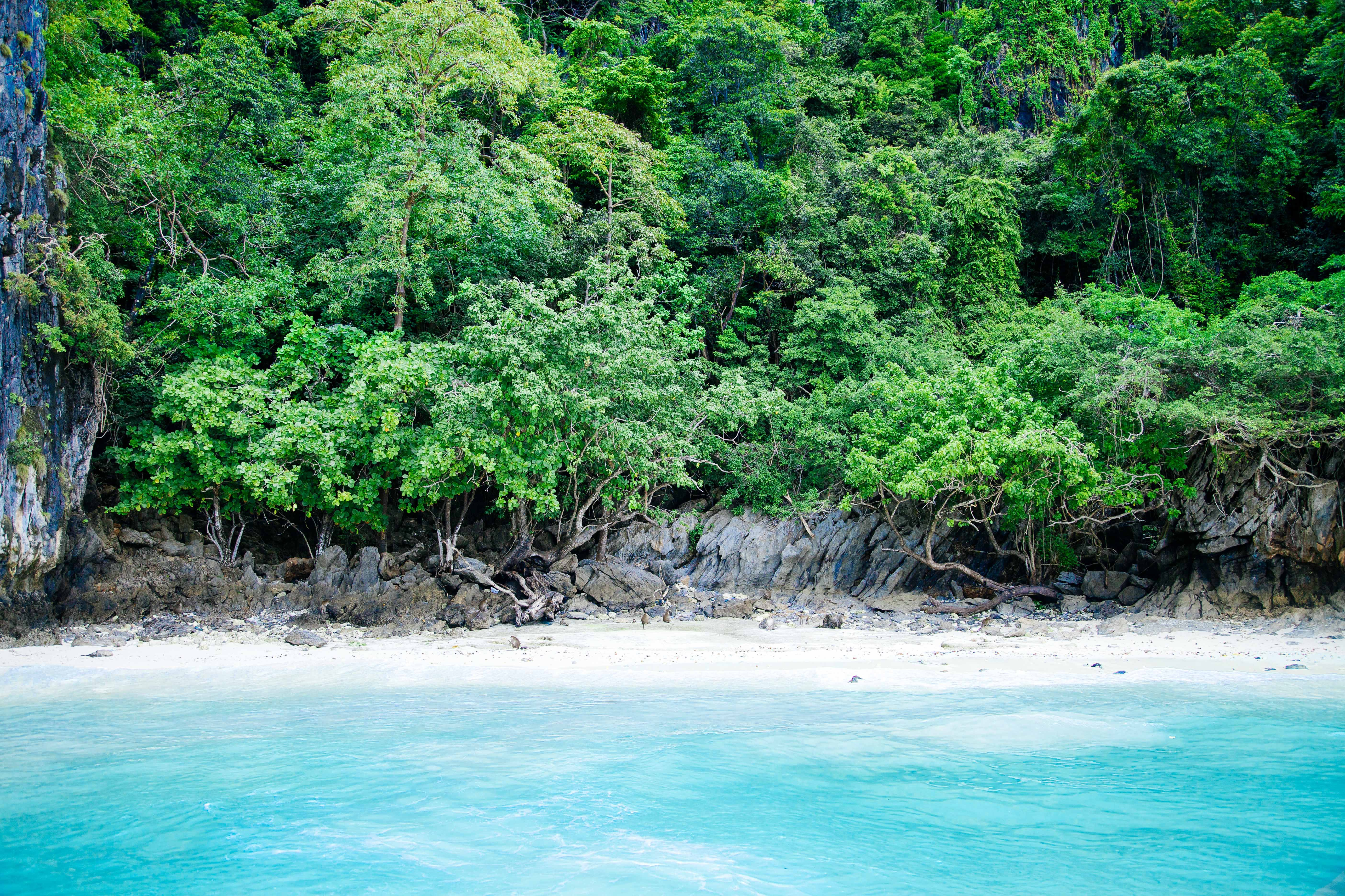 Azure sea water and a white sandy beach under a canopy of green trees