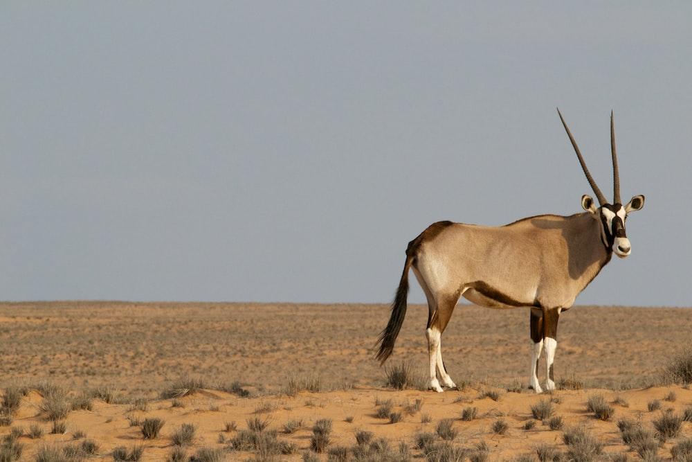 brown four-legged animal on field under gray sky