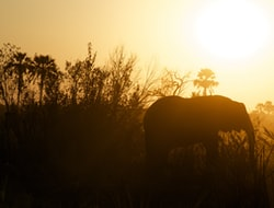 Tsavo Ost Nationalpark - Temple Point Resort