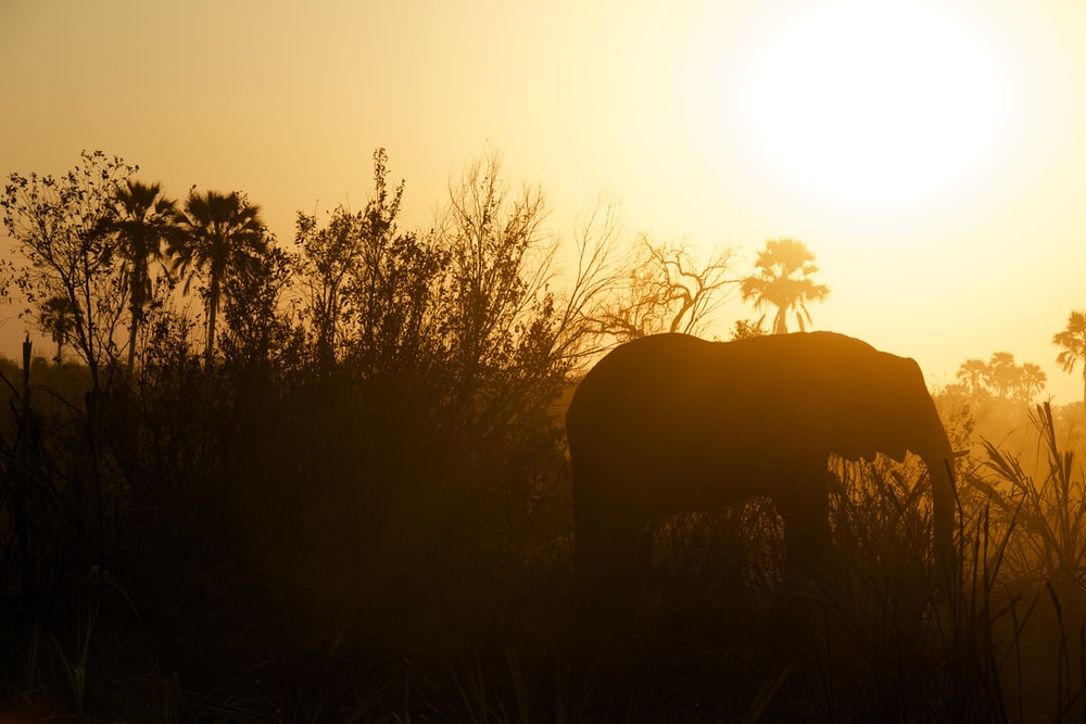 silhouette photography of elephant near grasses
