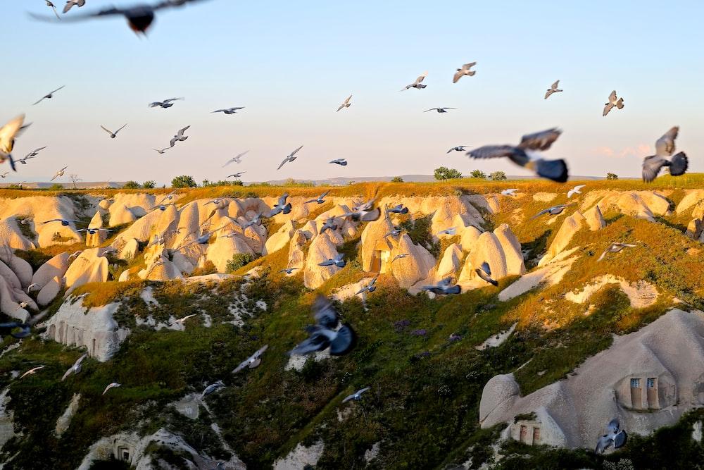 photo of migratory birds on rocks
