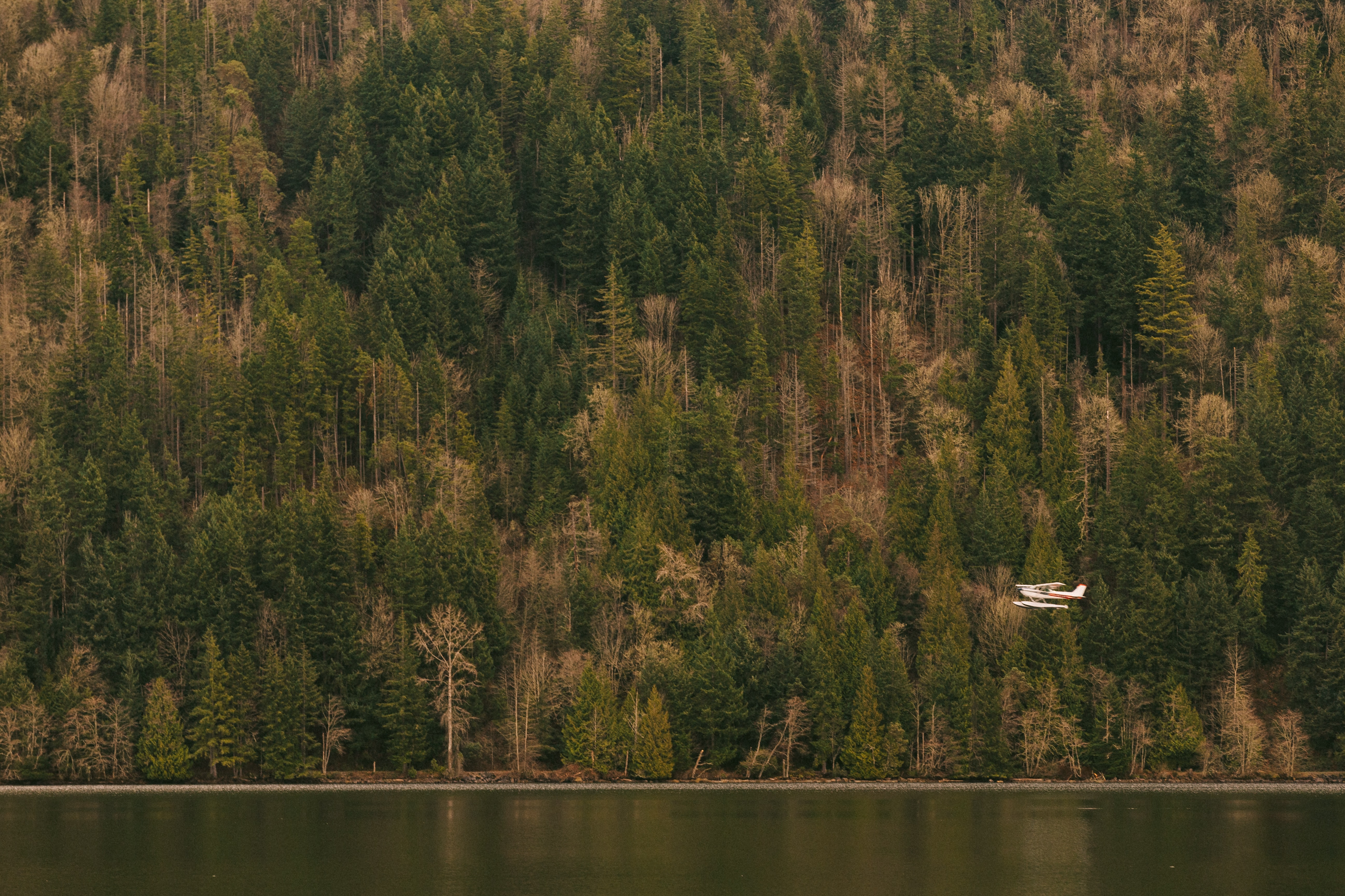 Plane flies over a calm lake near green forest trees