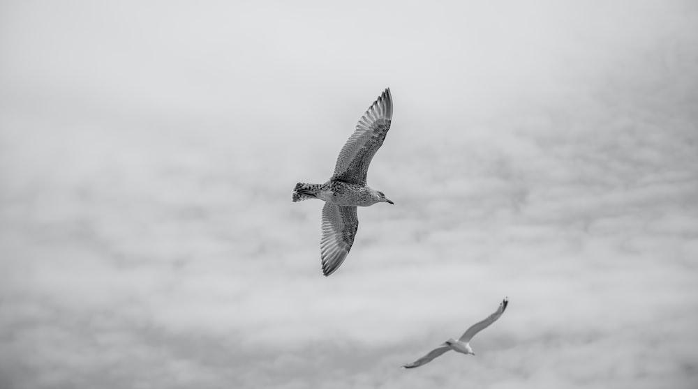 white and black bird soaring high