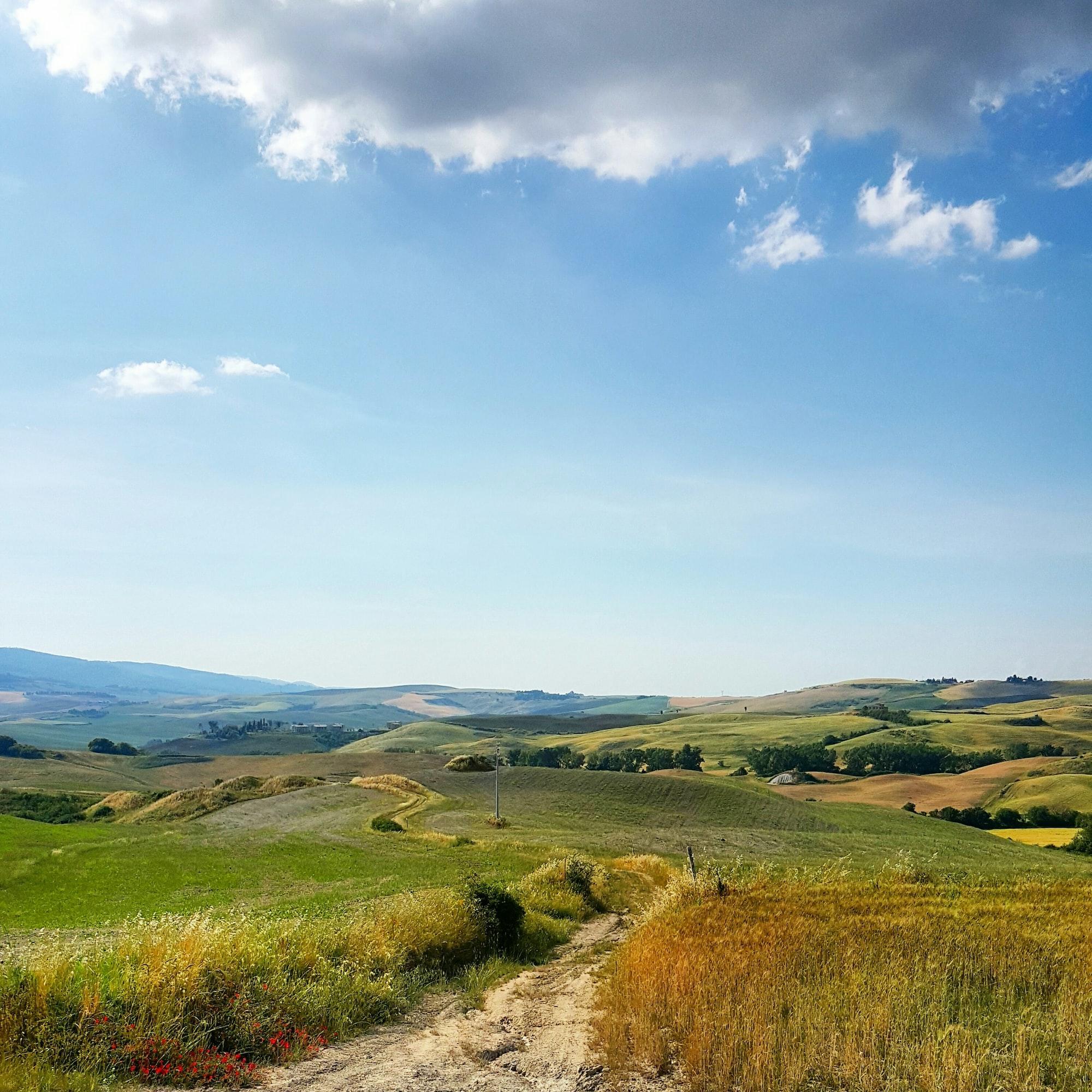 Пейзаж. Фотография поля