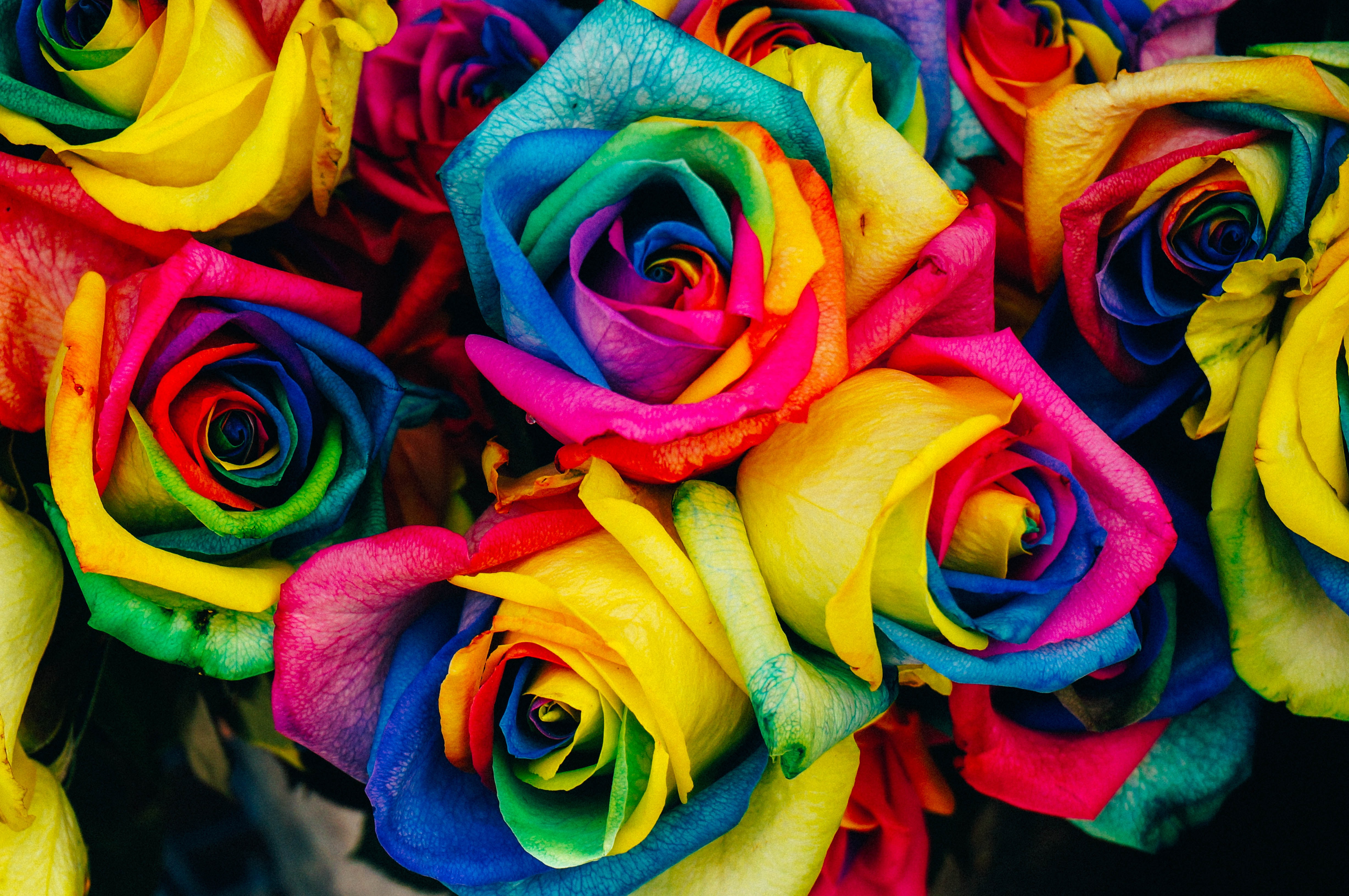 Roses dyed many colors and tightly packed together