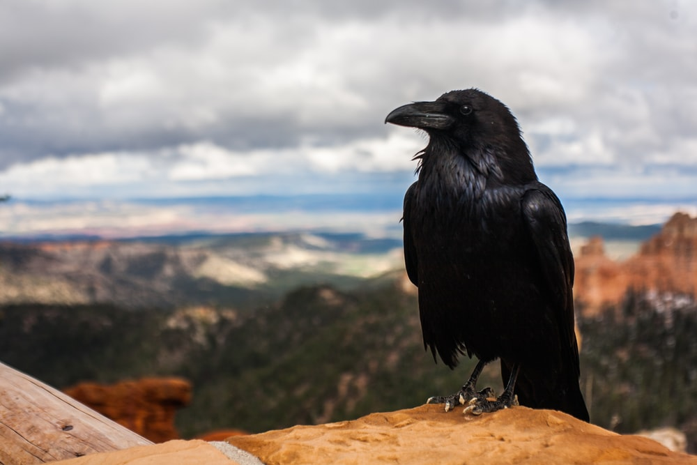 black crow on brown rock under cloudy sky at daytime