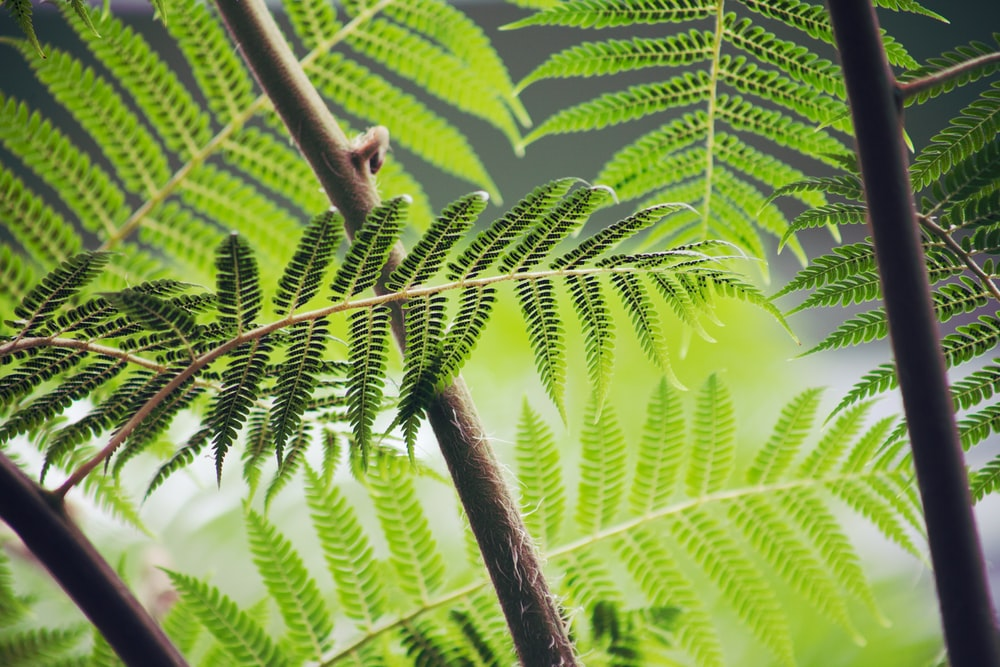 shallow focus photography of green fern plant