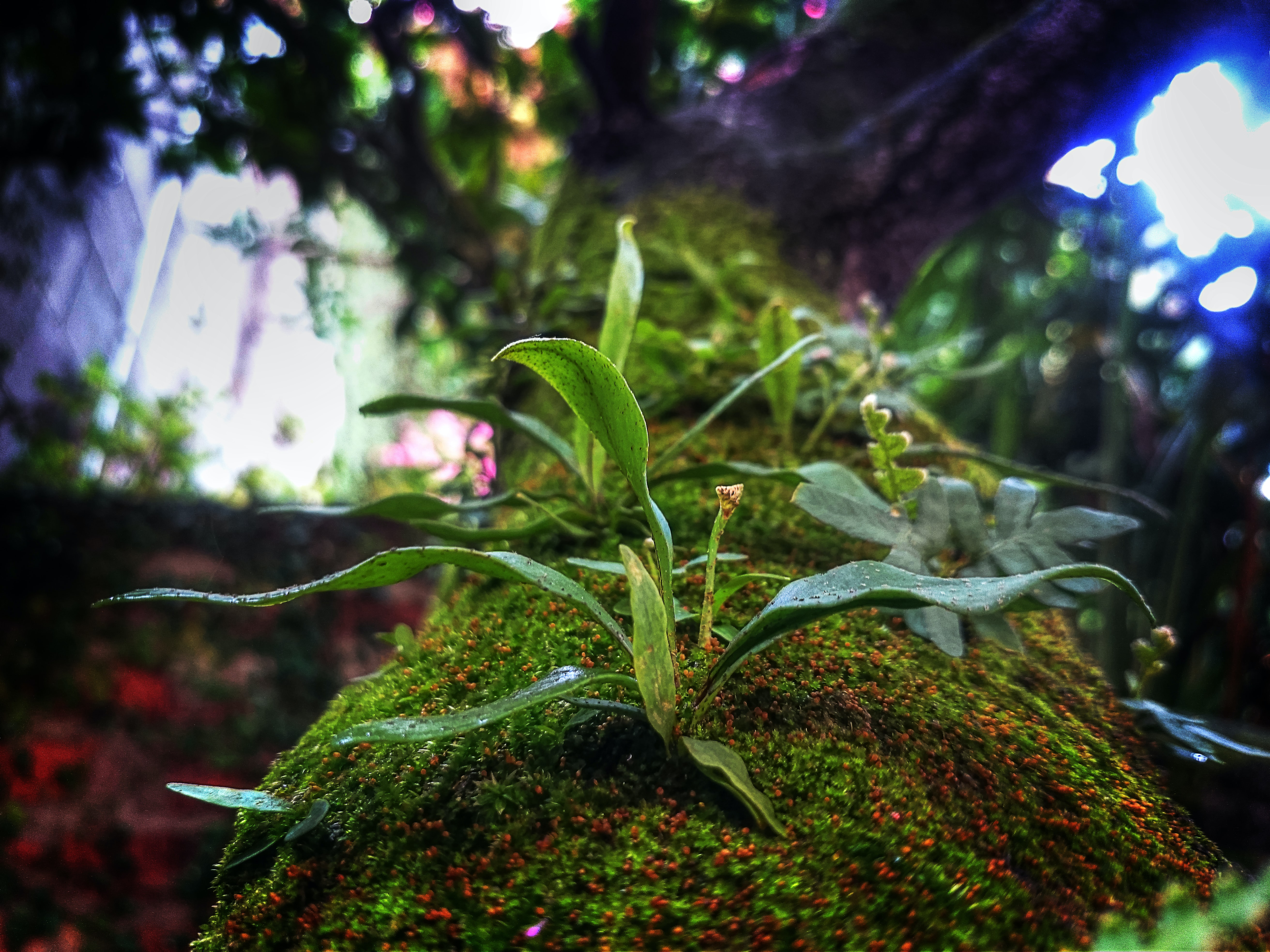 selective photo of green plant taken at daytime