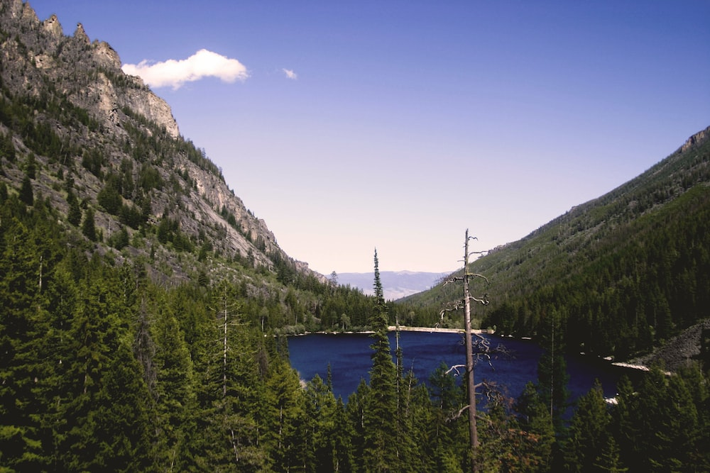 lake in the middle of pine forest by a mountain during day