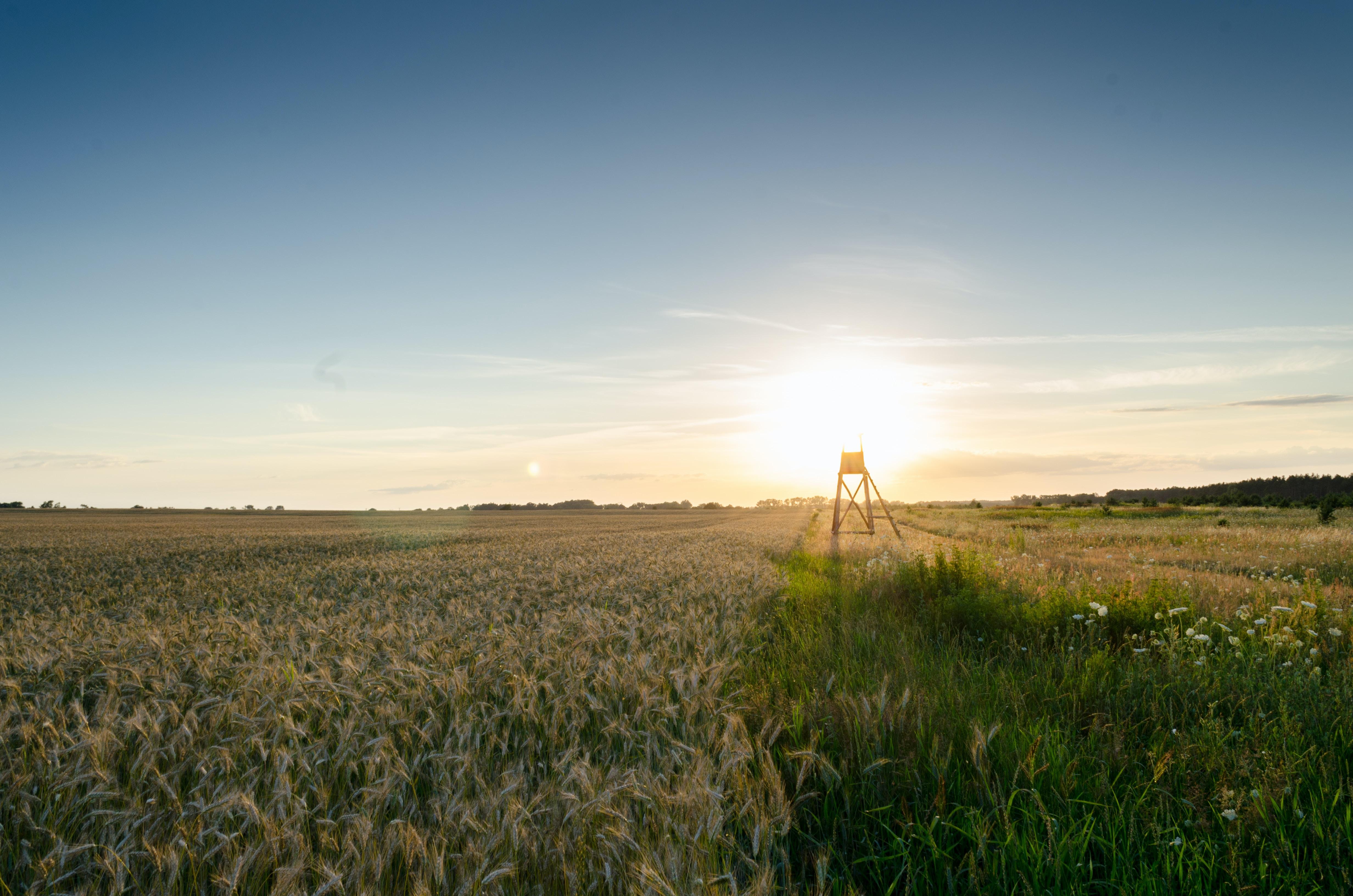landscape photography of plant field
