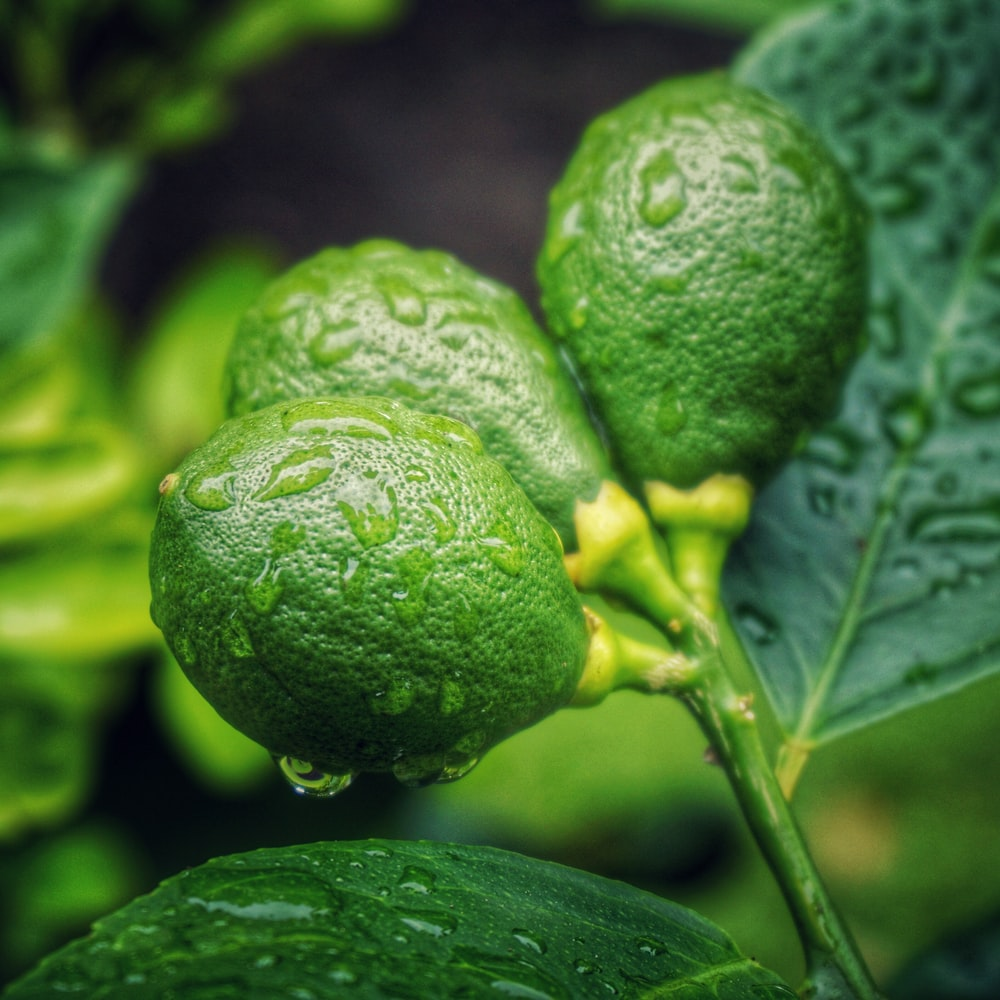 close-up photo of green lemon with drops of water during daytime