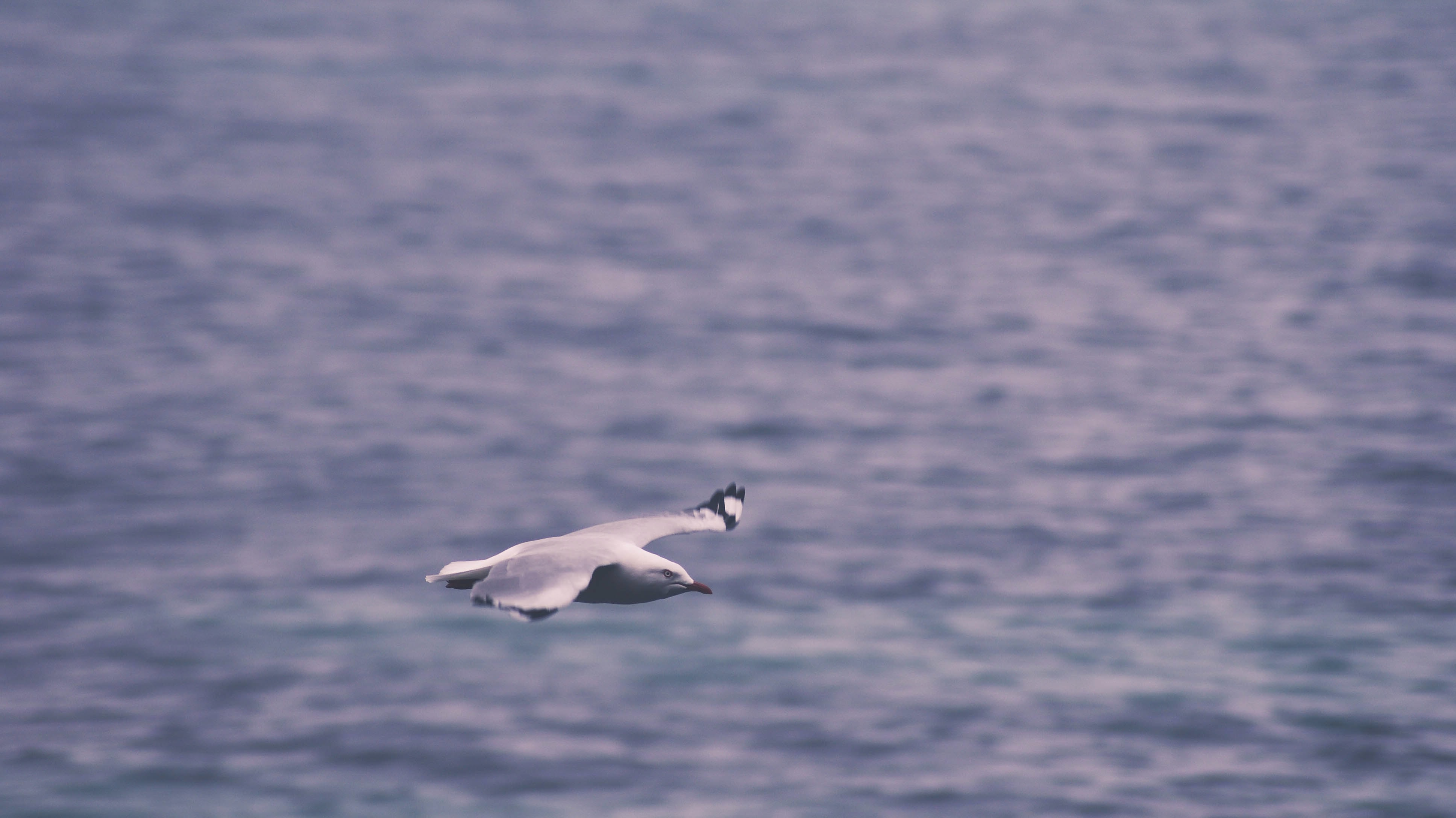 white seagull mid-flight above water duringday