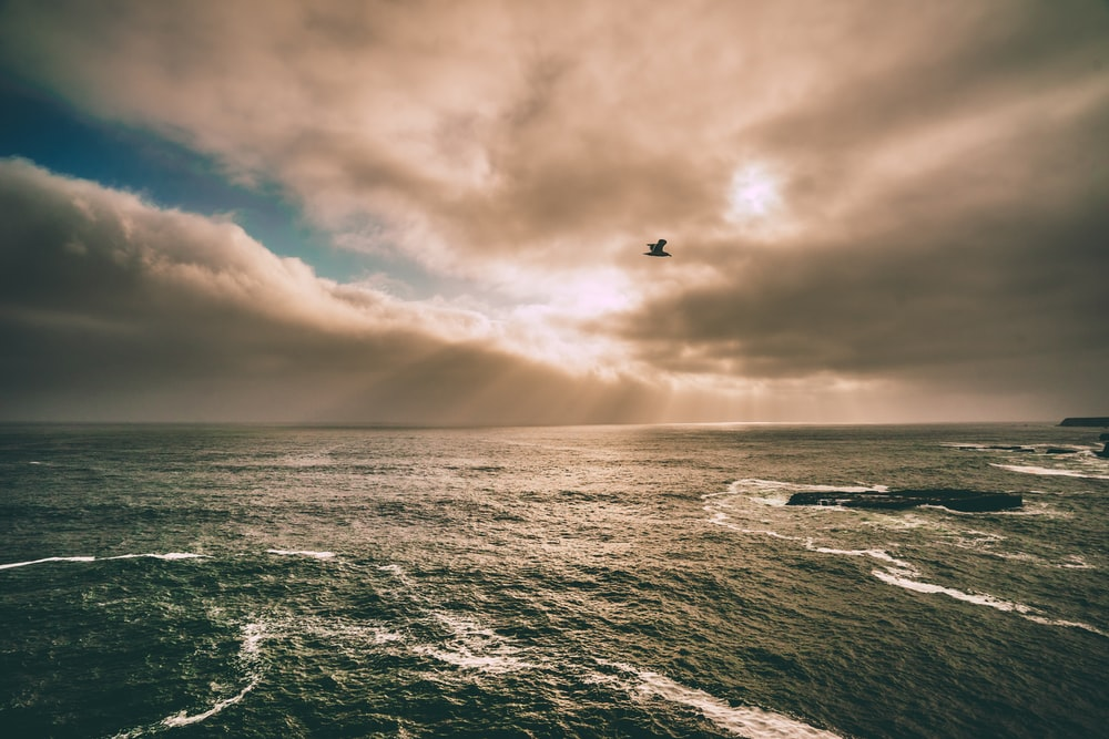 photo of bird flying above the water under gray sky