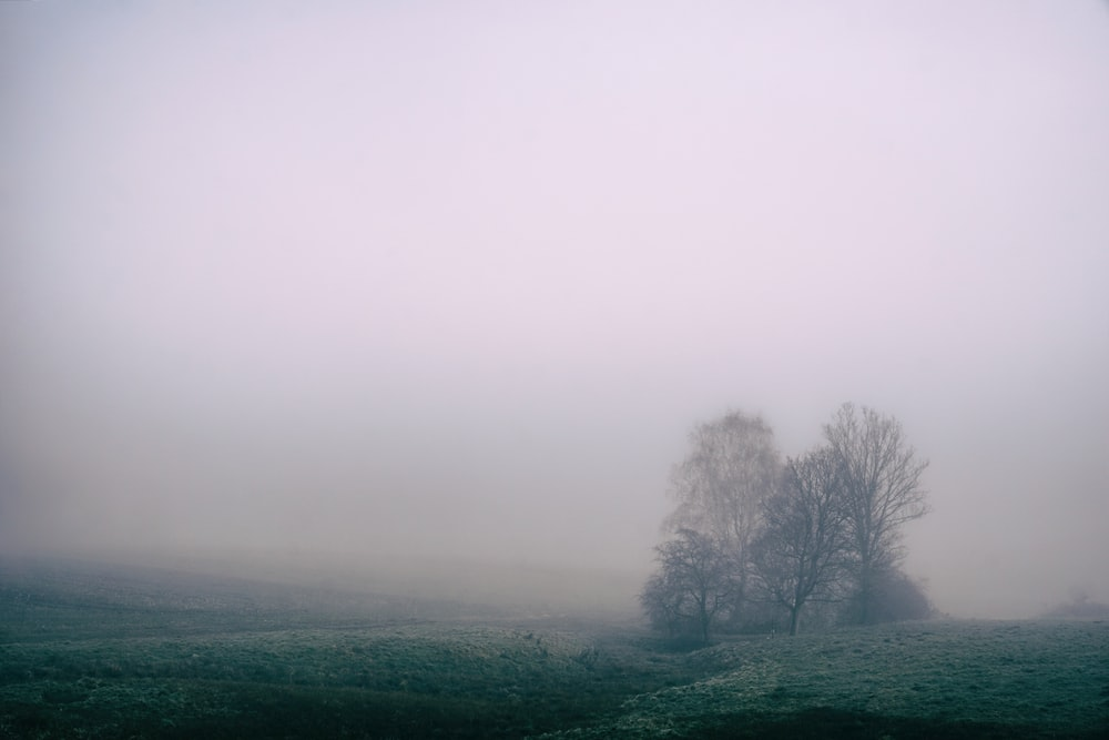 tree on green grass field during foggy daytime