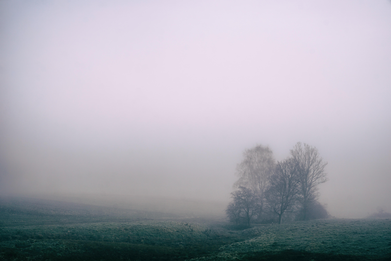 A foggy field with a gray misty sky