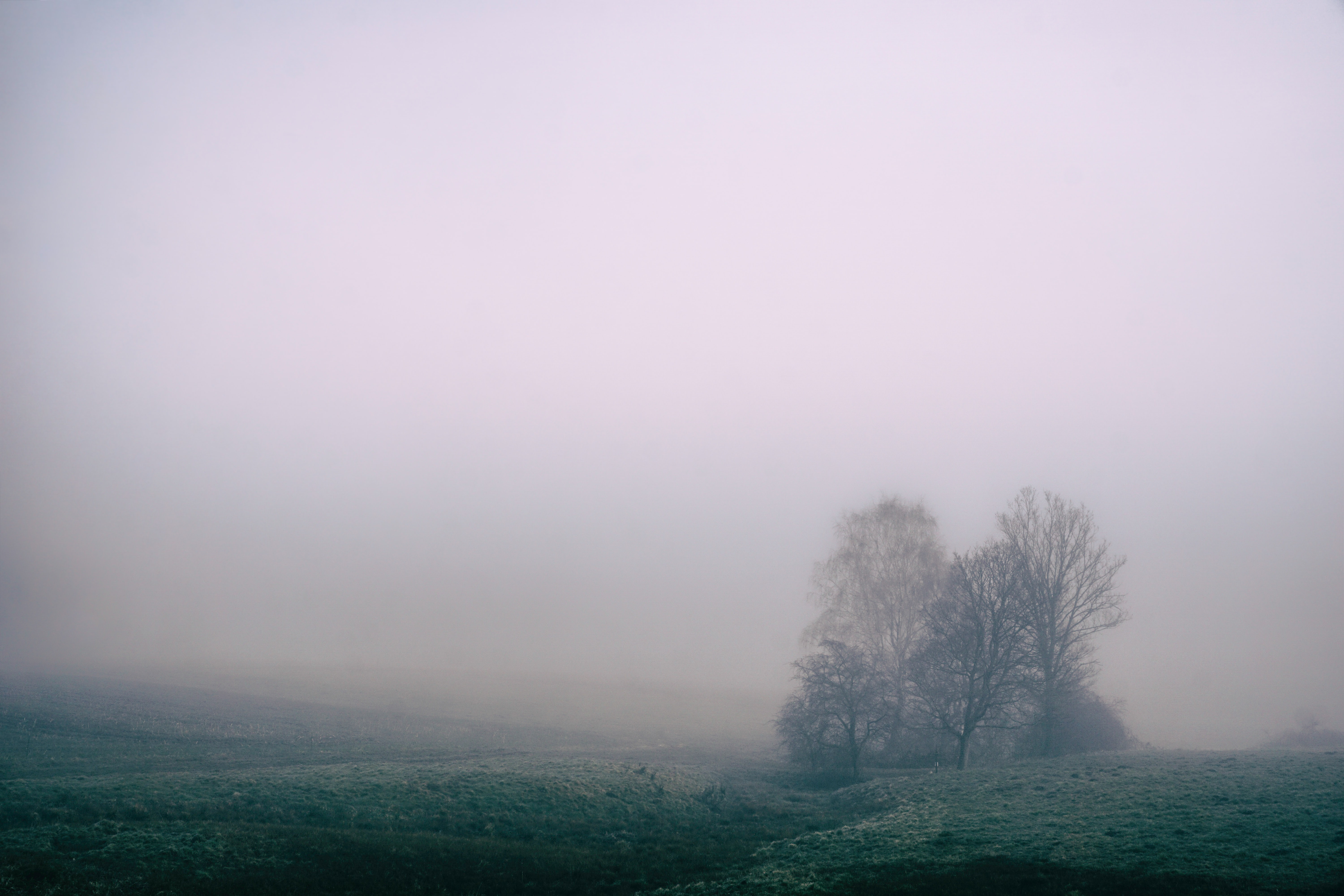 A foggy field with a gray misty sky
