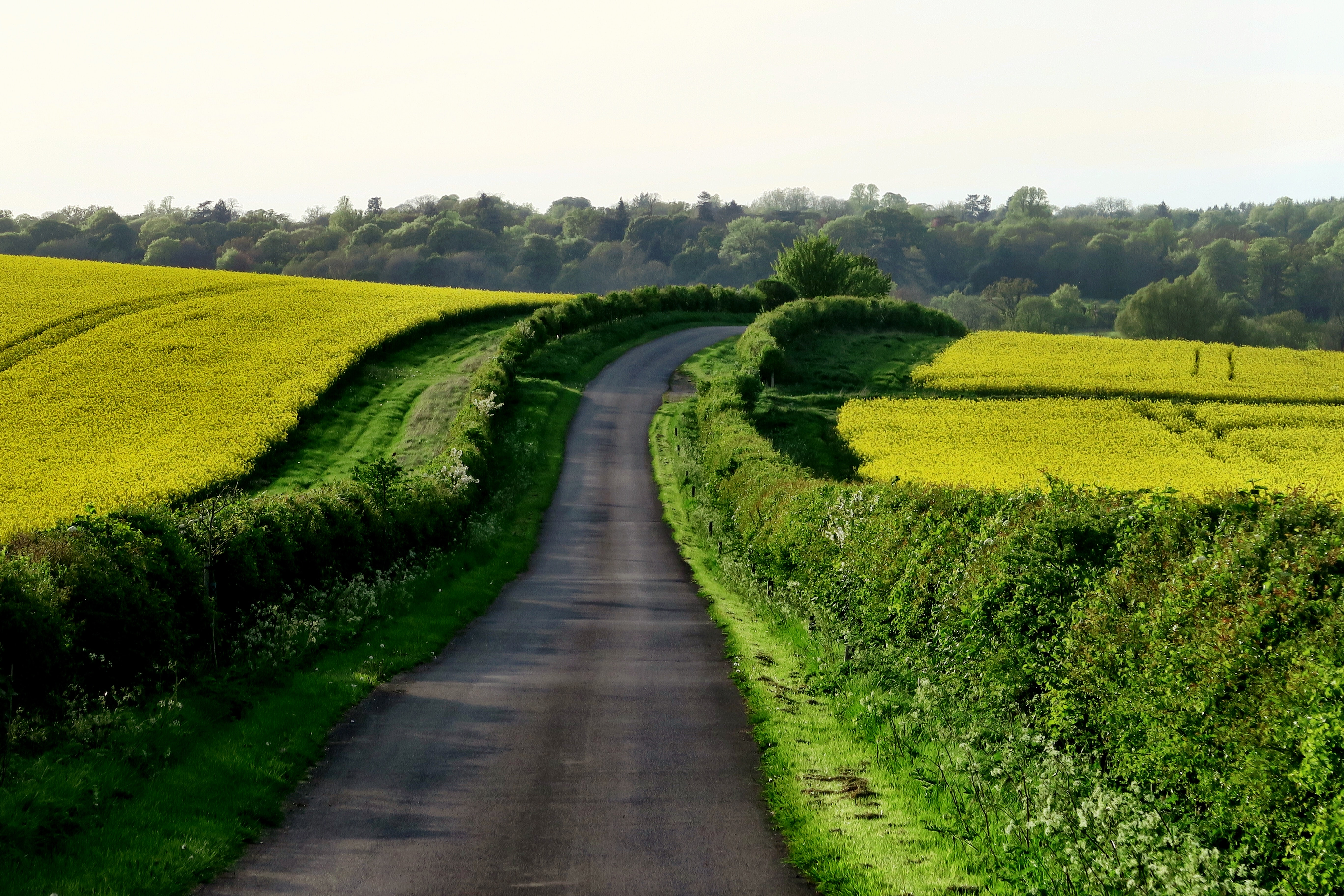 Country road leads through a path of lush grassy fields