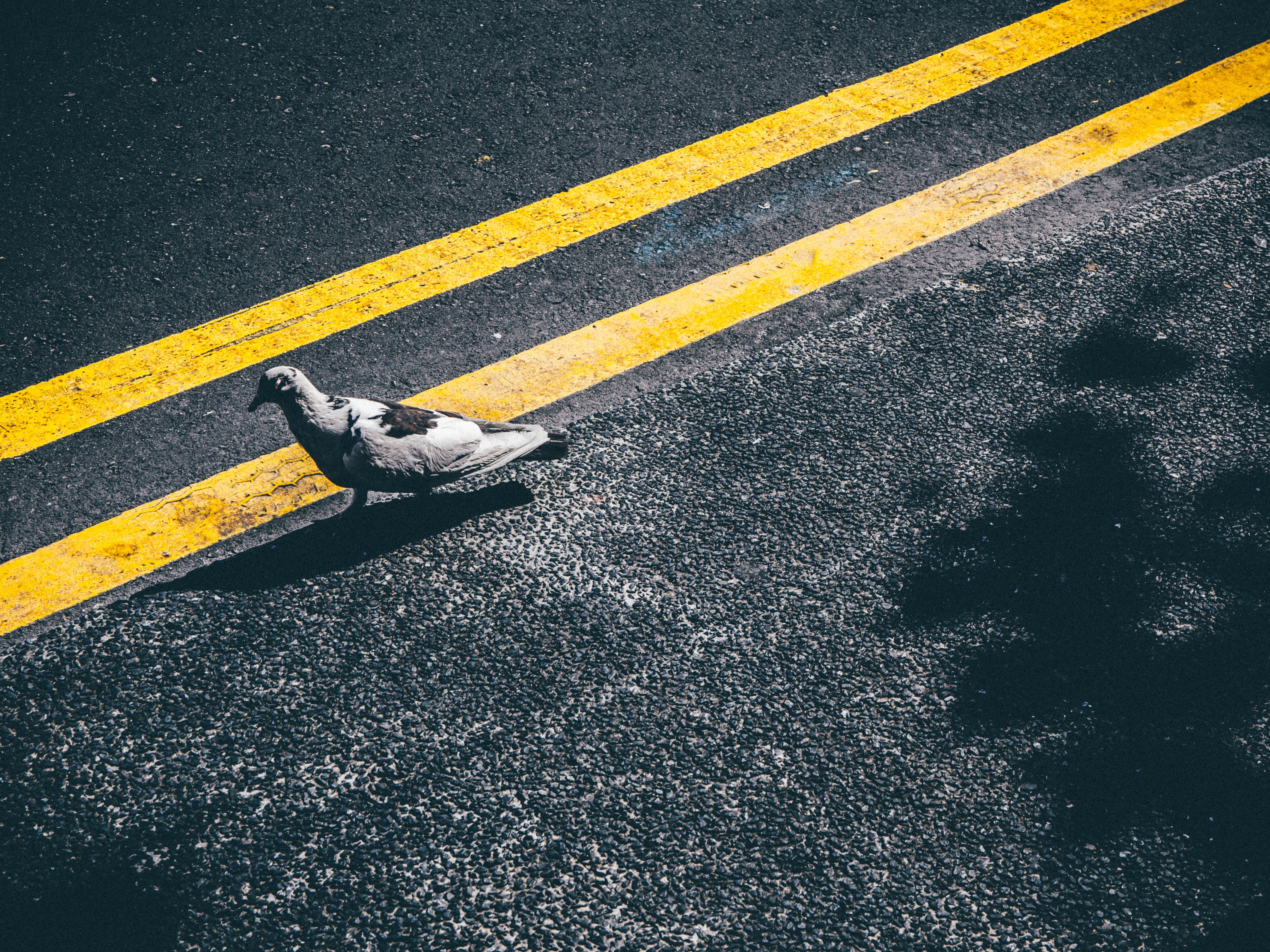 bird on asphalt road