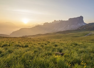 photo of green grass field at sunrise