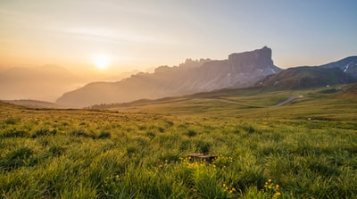 photo of green grass field at sunrise landscape teams background