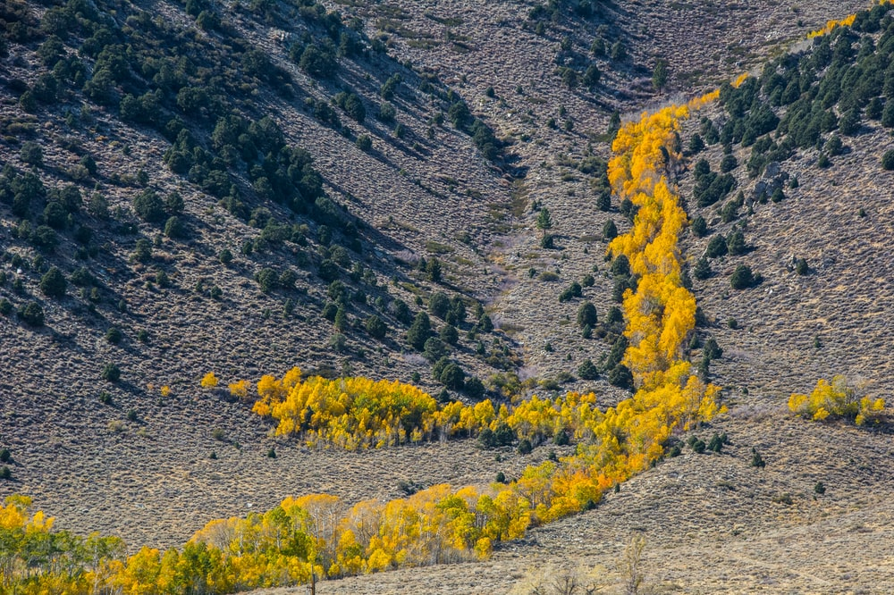 aerial photo of trees and mountain