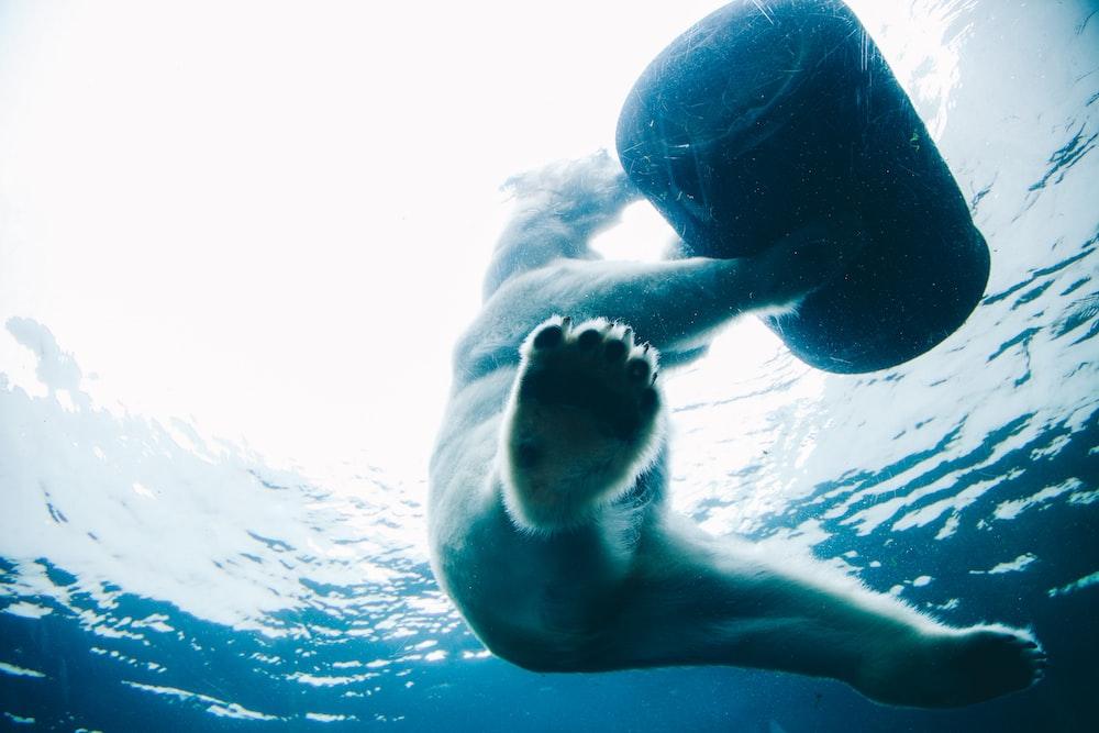 bear on body of water