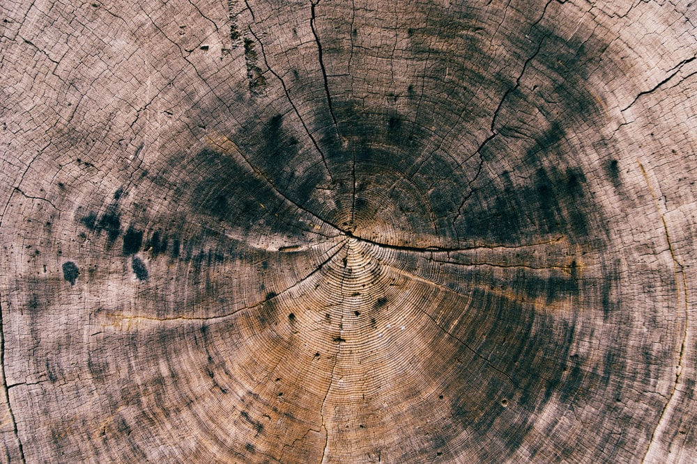 round brown and black cut tree