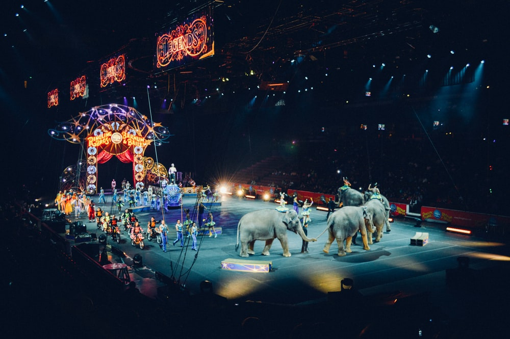 gray elephants performing on circus