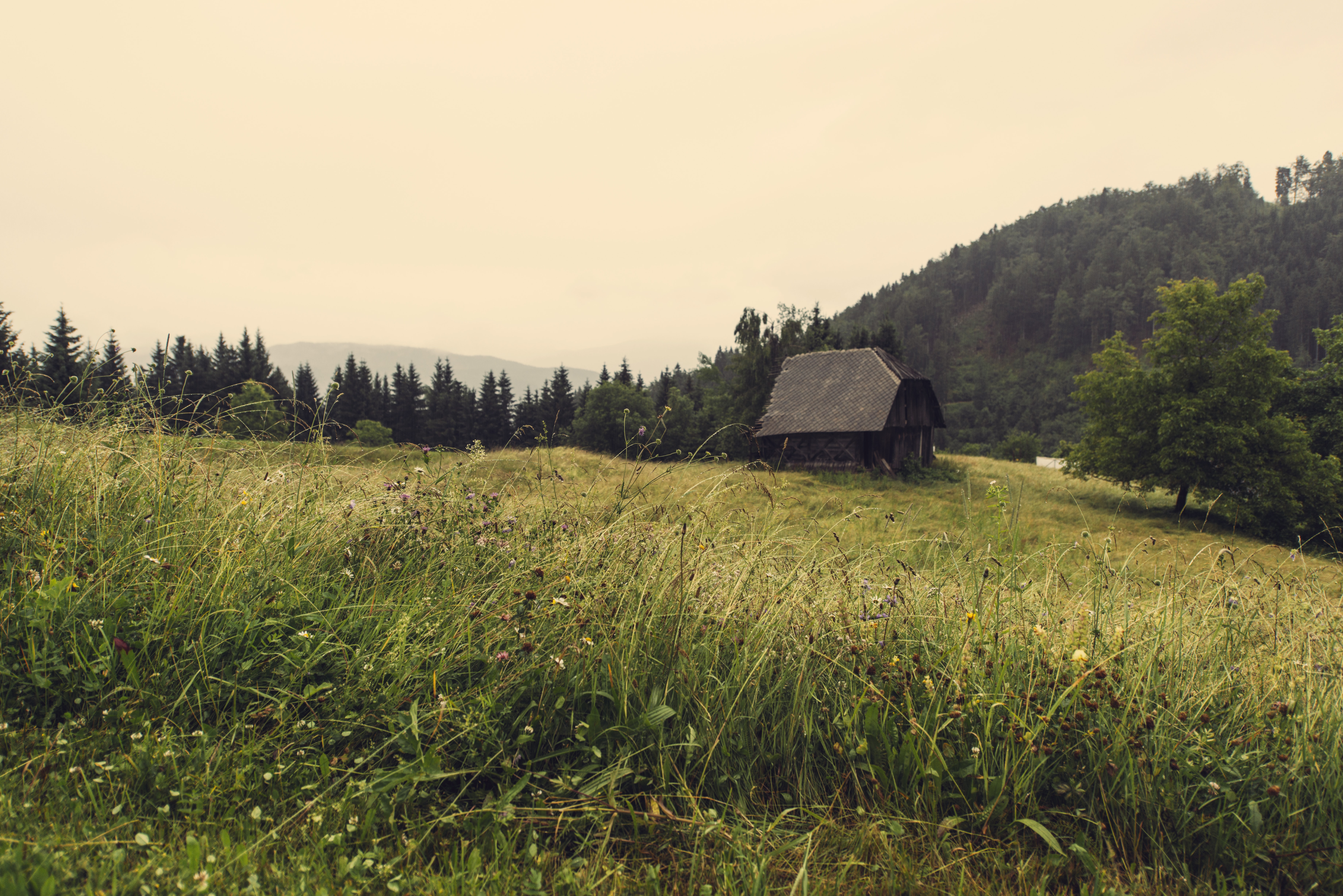 Small cottage in the mountains with wildflowers, grass, and trees surrounding it