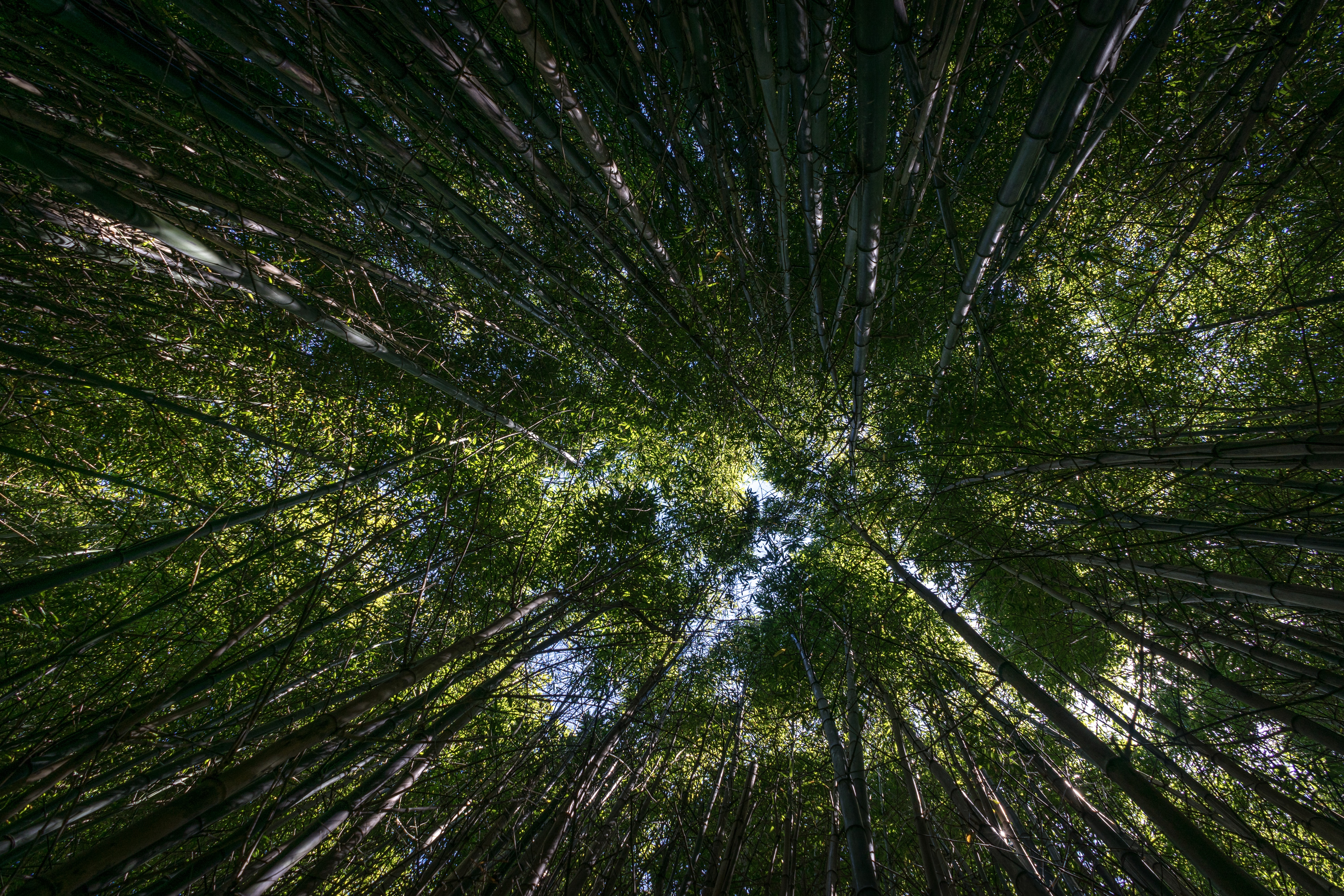 Looking up in the middle of a plush, green forest