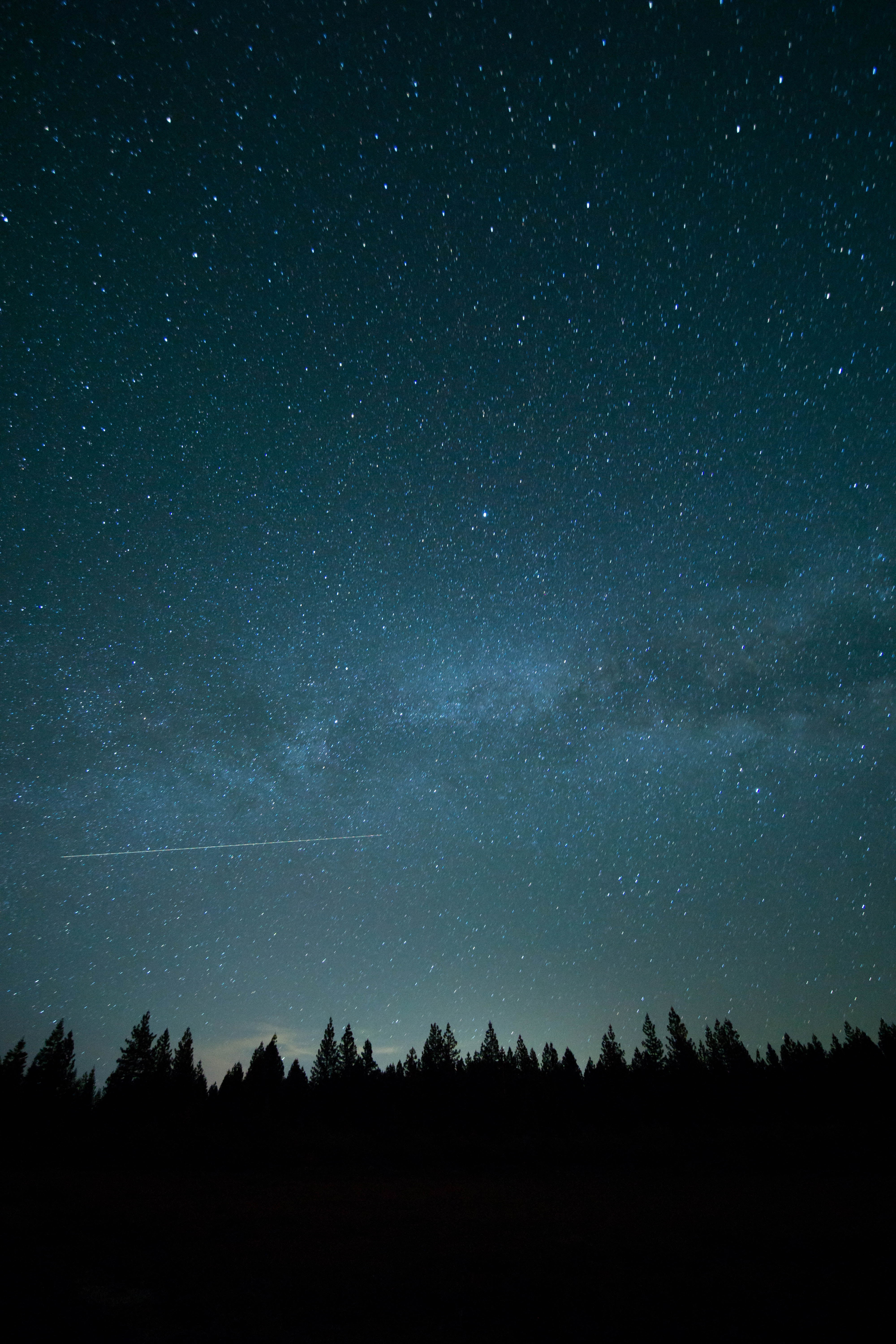 A shooting star travels across the starry night sky above the silhouette of the forest.