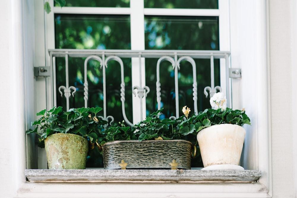 green-leafed plants in pots on window