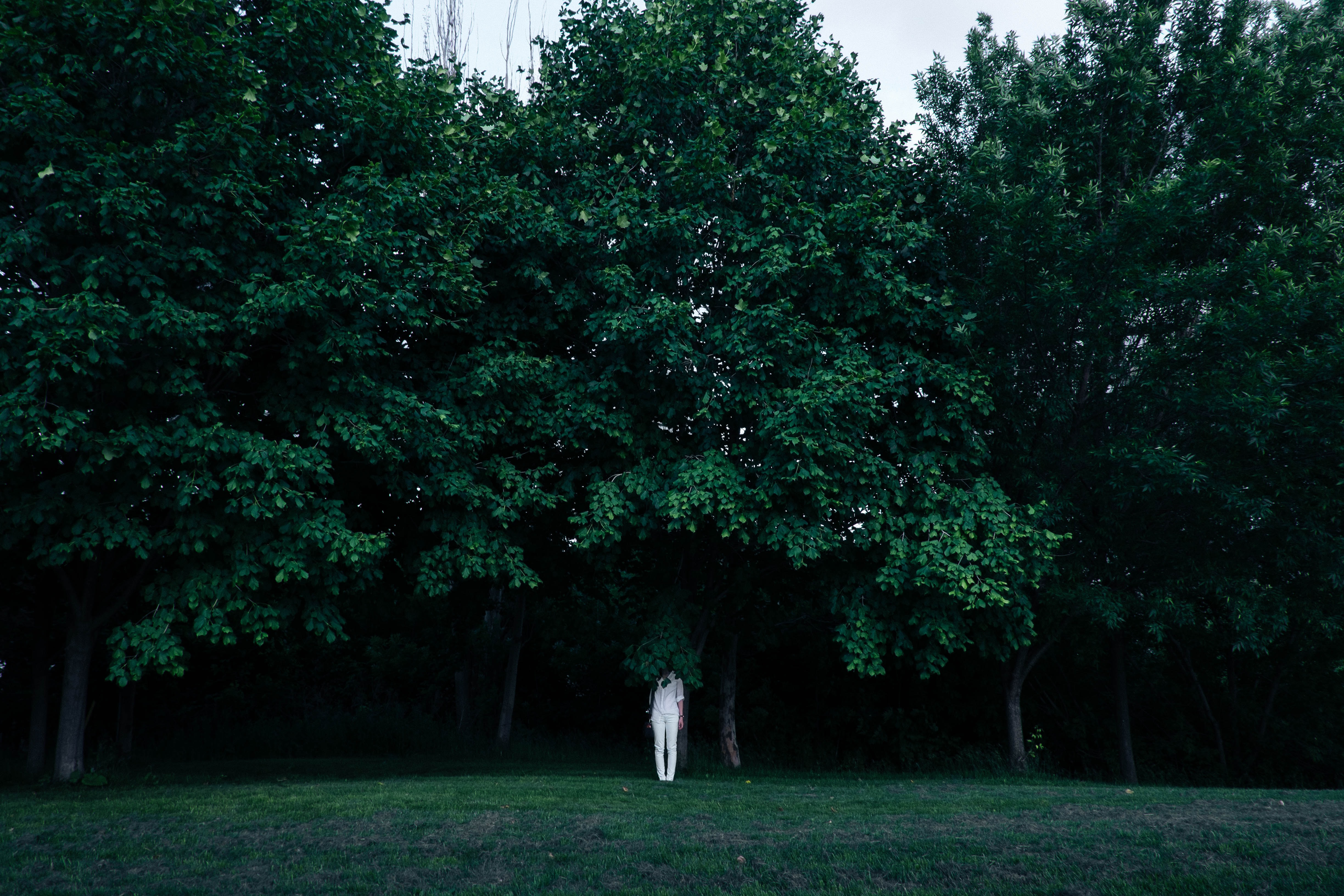 person standing under green leaf tree at daytime