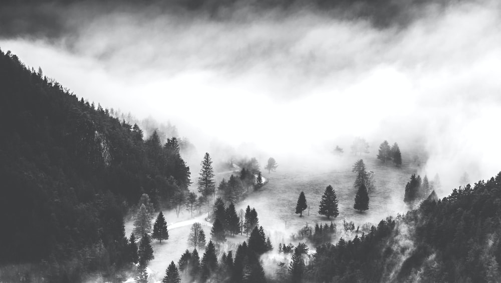 mountain covered with pine tree grayscale photography