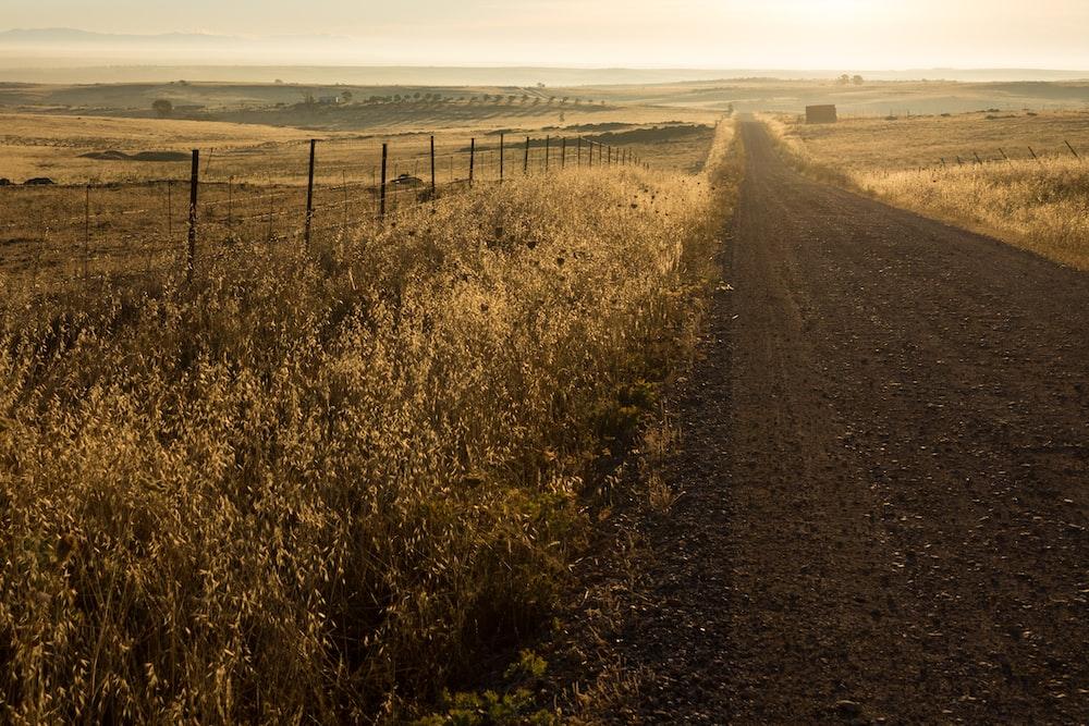 brown road between plants at daytime