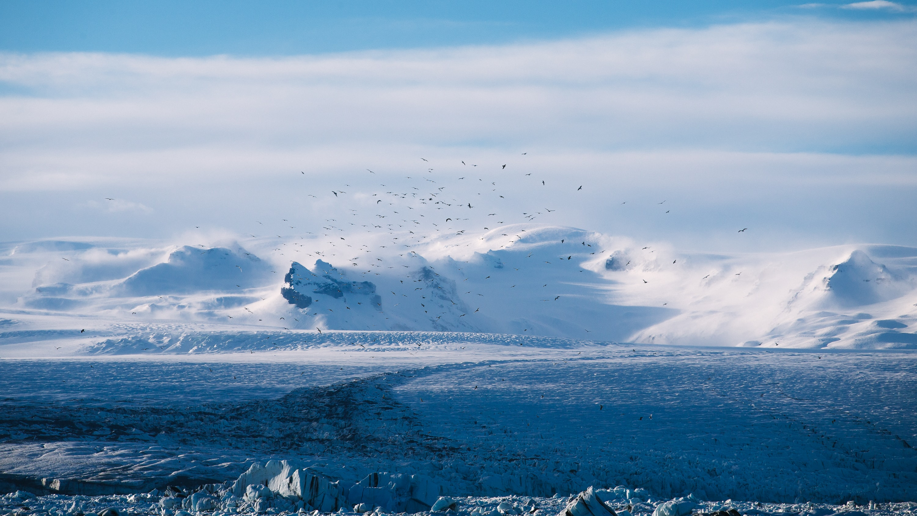 An Arctic landscape with a flock of birds circling above a glacial plain and snowy mountains at the back