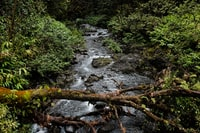 timelapse photography of river surrounded with trees