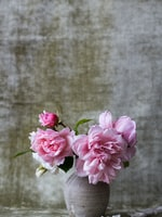5 Great Flowers for a Moonlight Garden