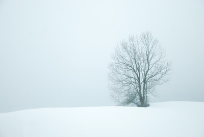 Tree in fog and snow