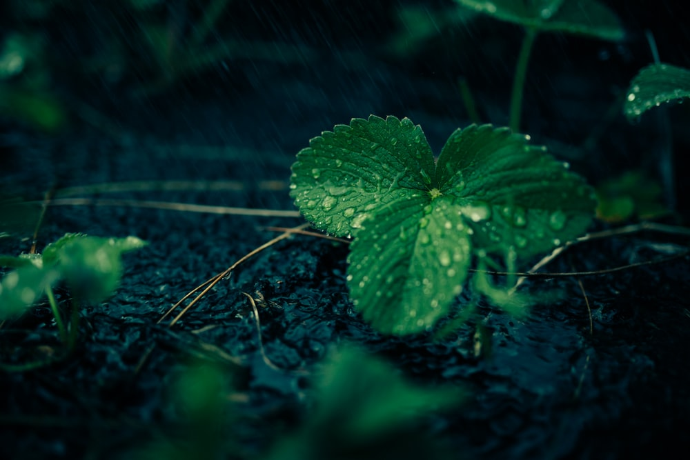 green leafed plant with waters