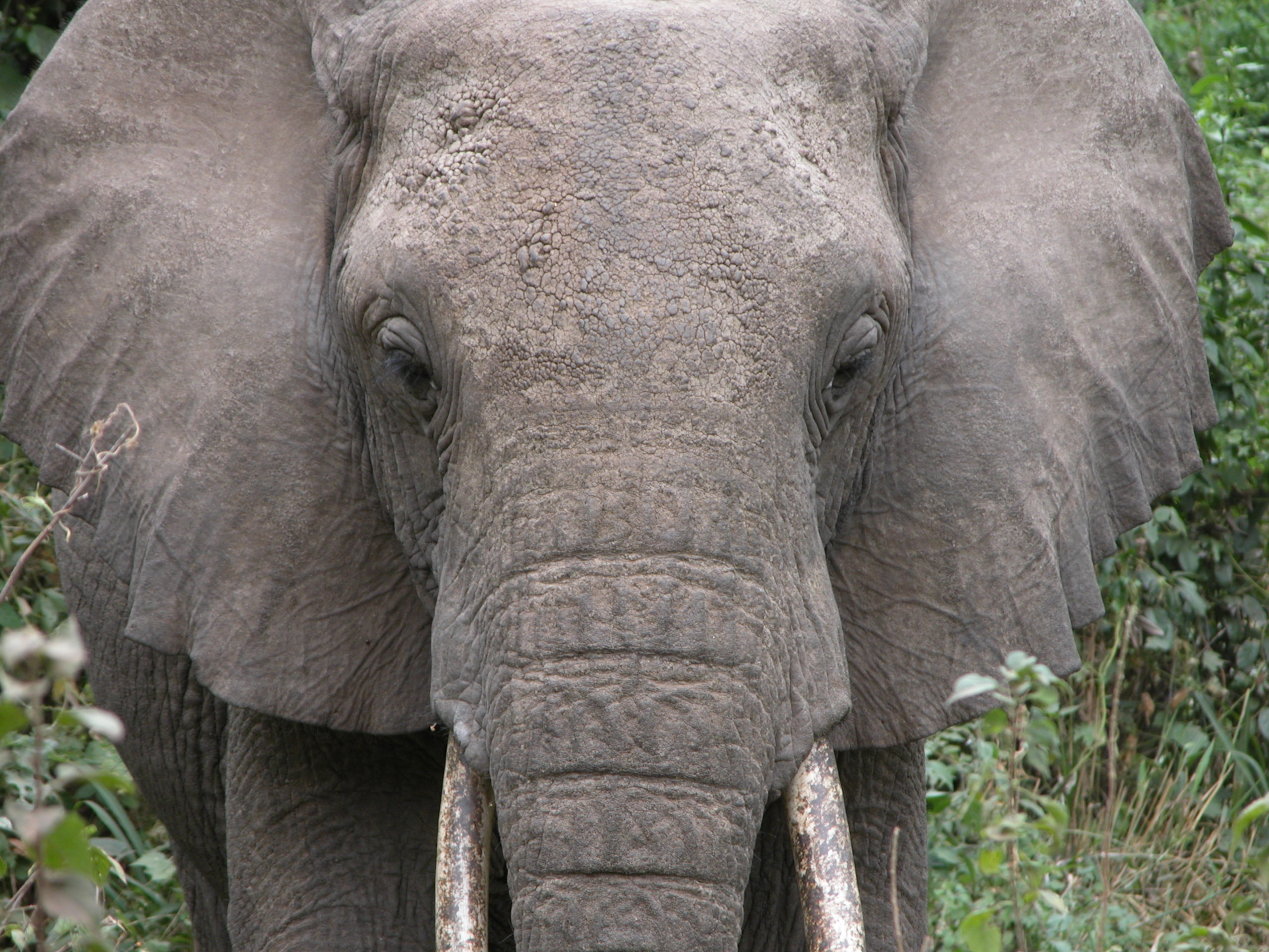 gray elephant near green leaf plant