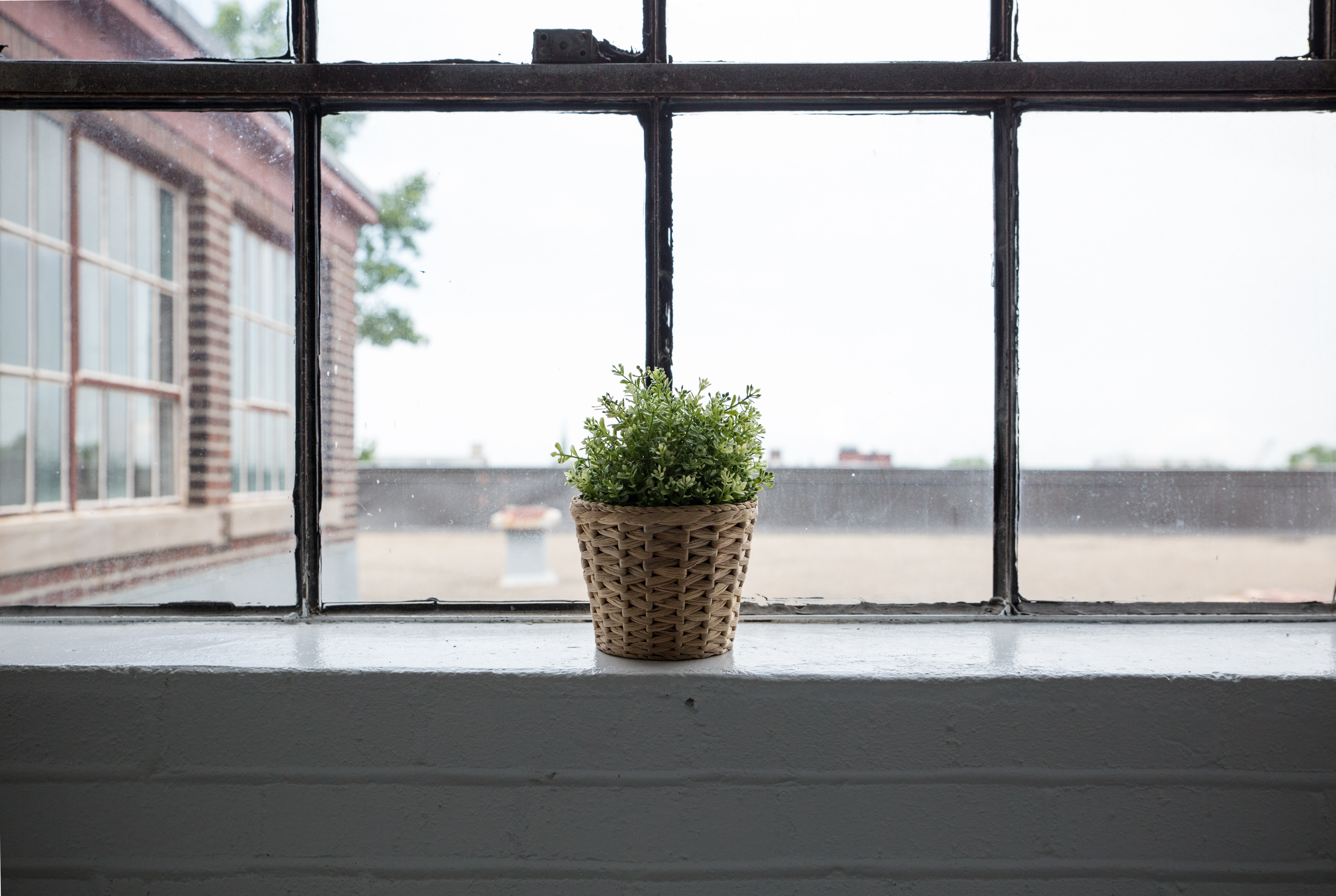 Small green potted plant in wicker basket on window sill with large window during daytime